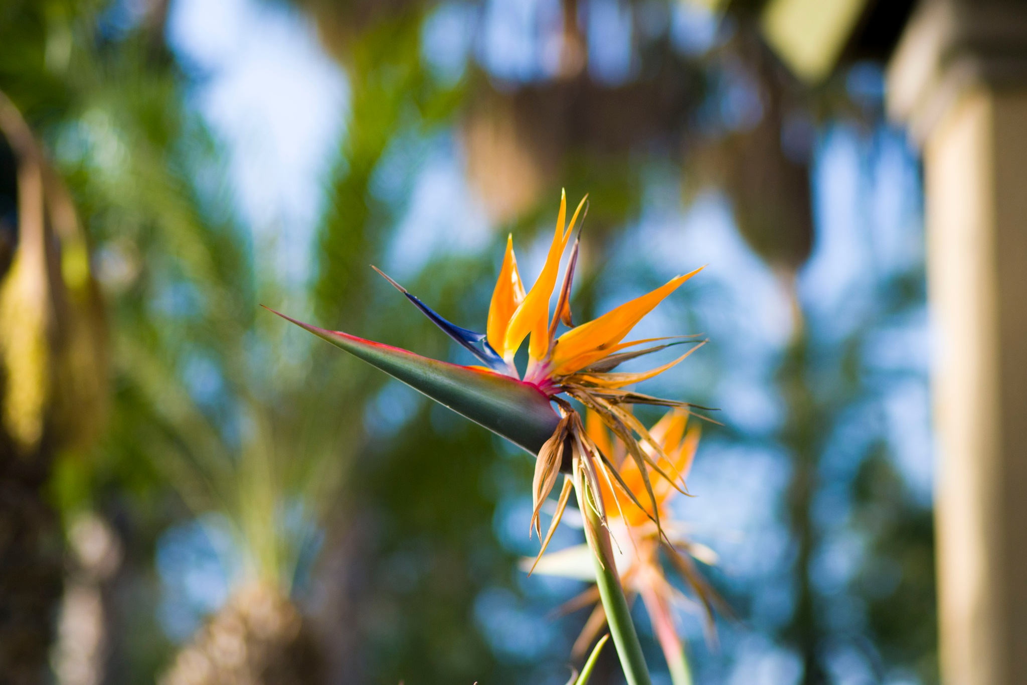 bird flower by BearMan