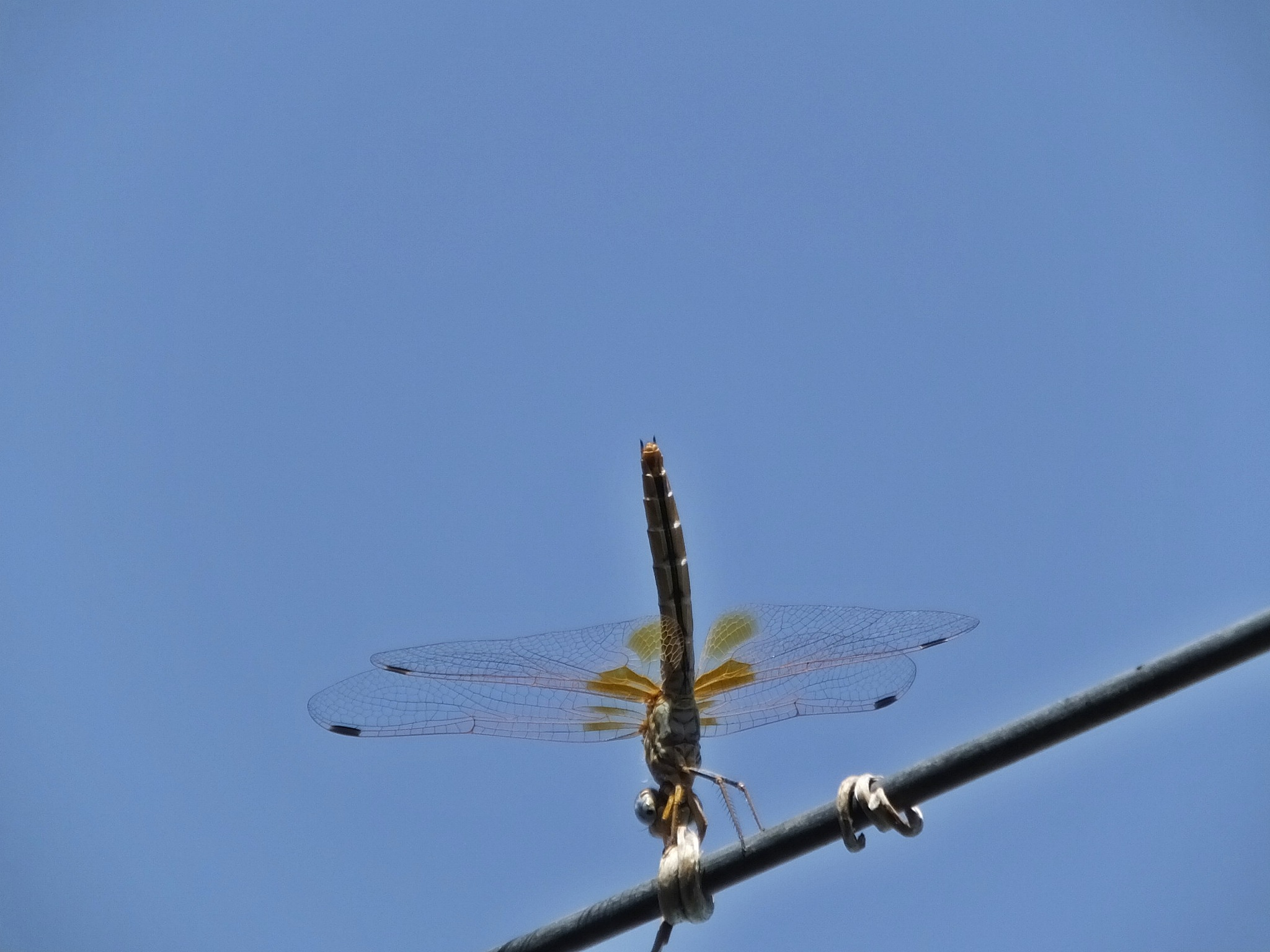 Dragonfly on the wire by Peter Rowland
