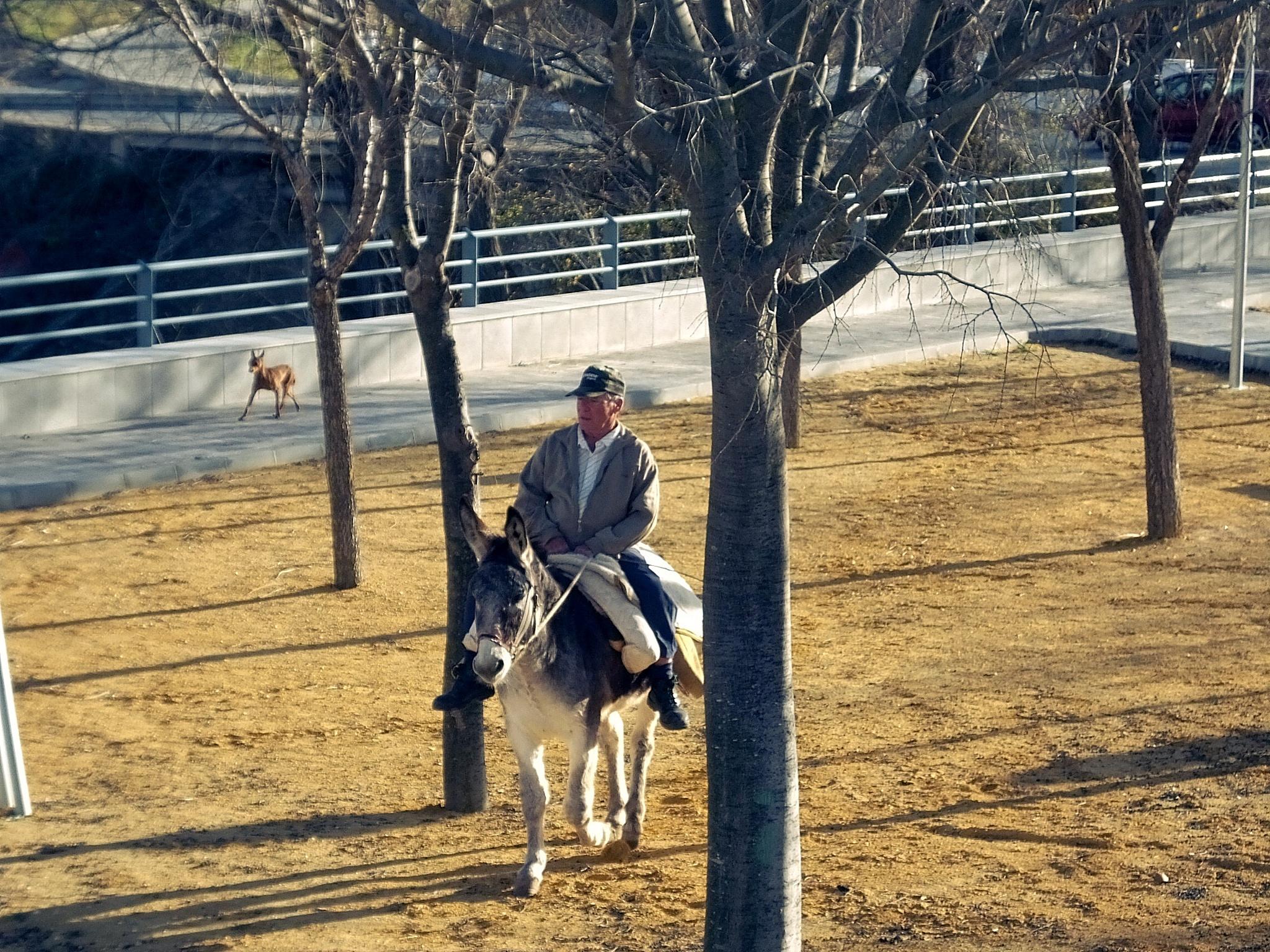 Photo in Rural #donkey #short cut