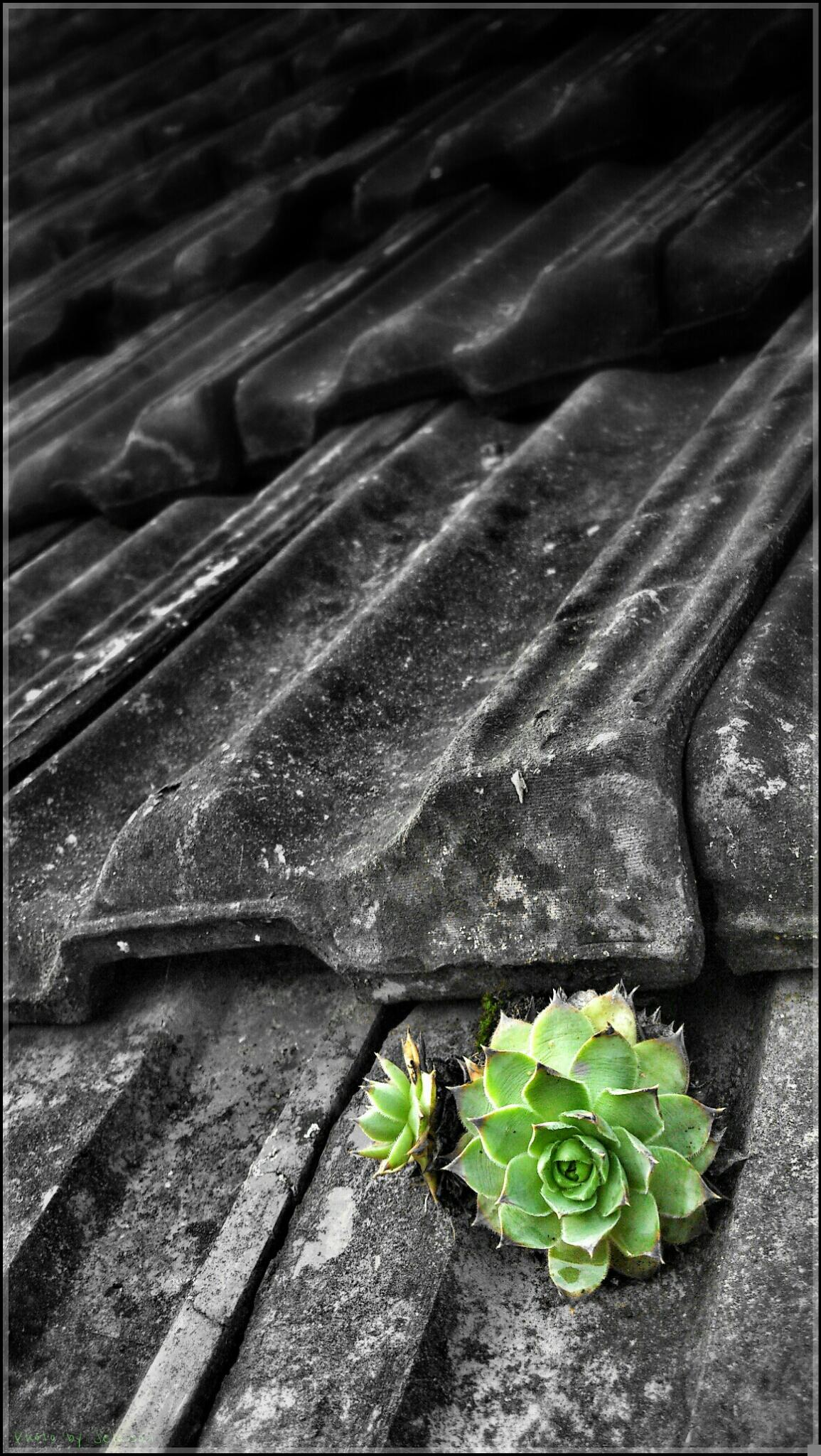 Photo in Random #life #plant #survival #green #roof