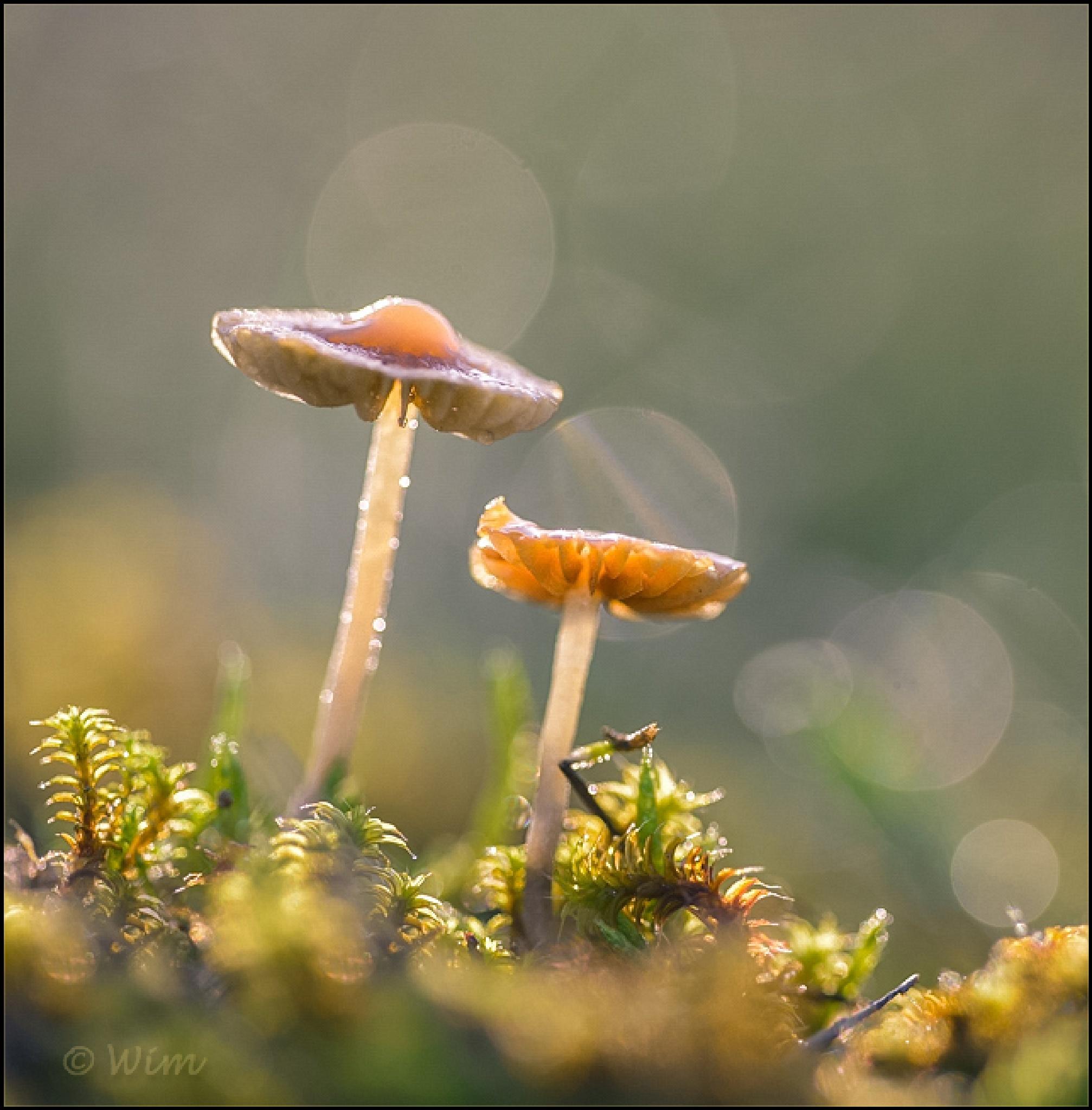 Fungi by wim.brackez