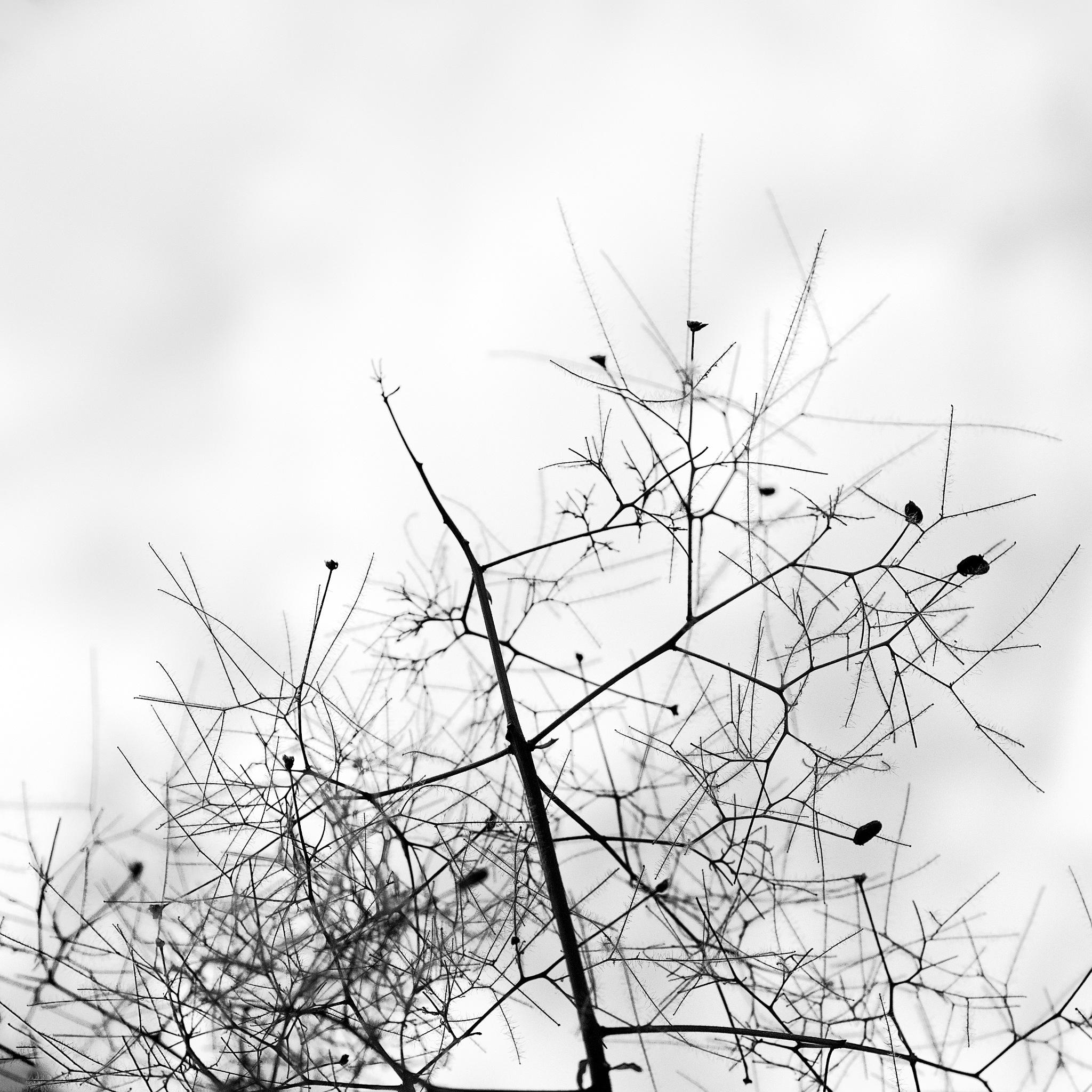 twigs by macplox
