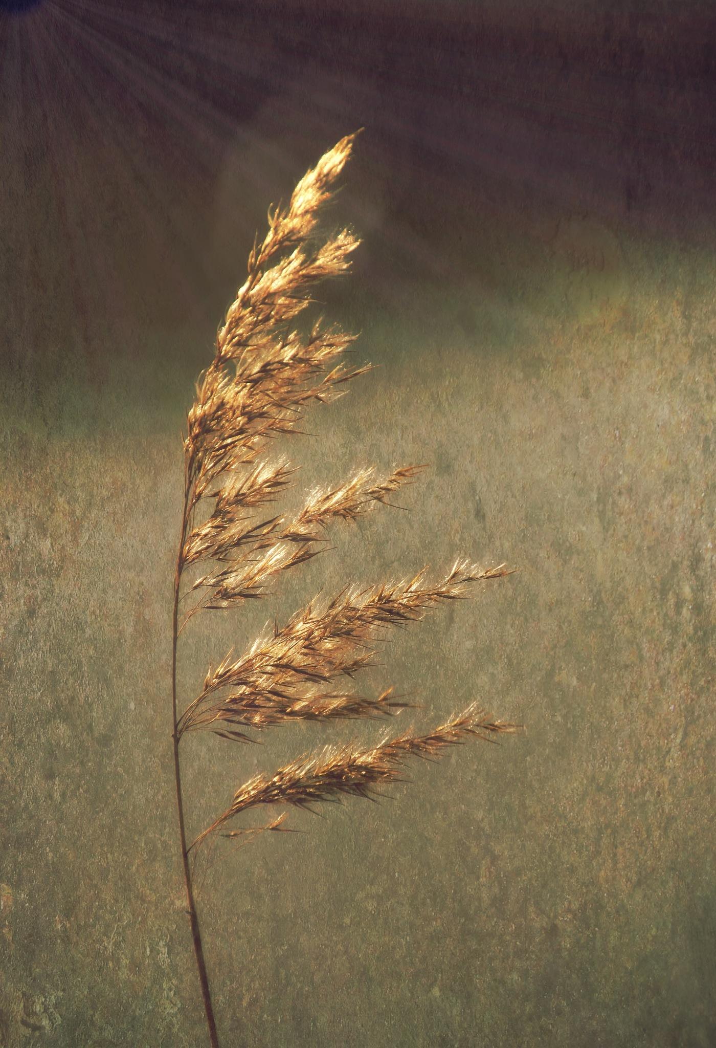 Gold by annamaria.jacobsgalluzzi