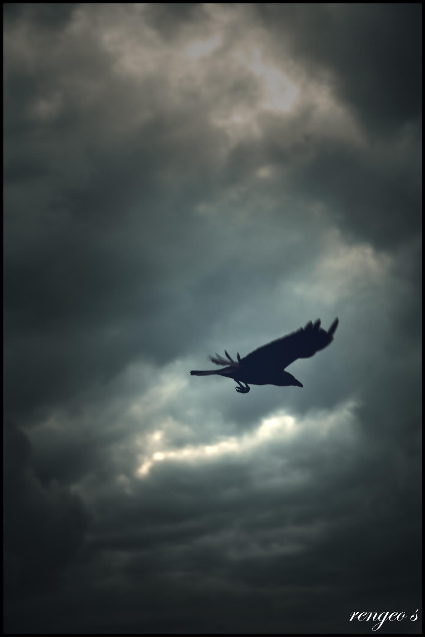Photo in Animal #bird #crow #storm #flying