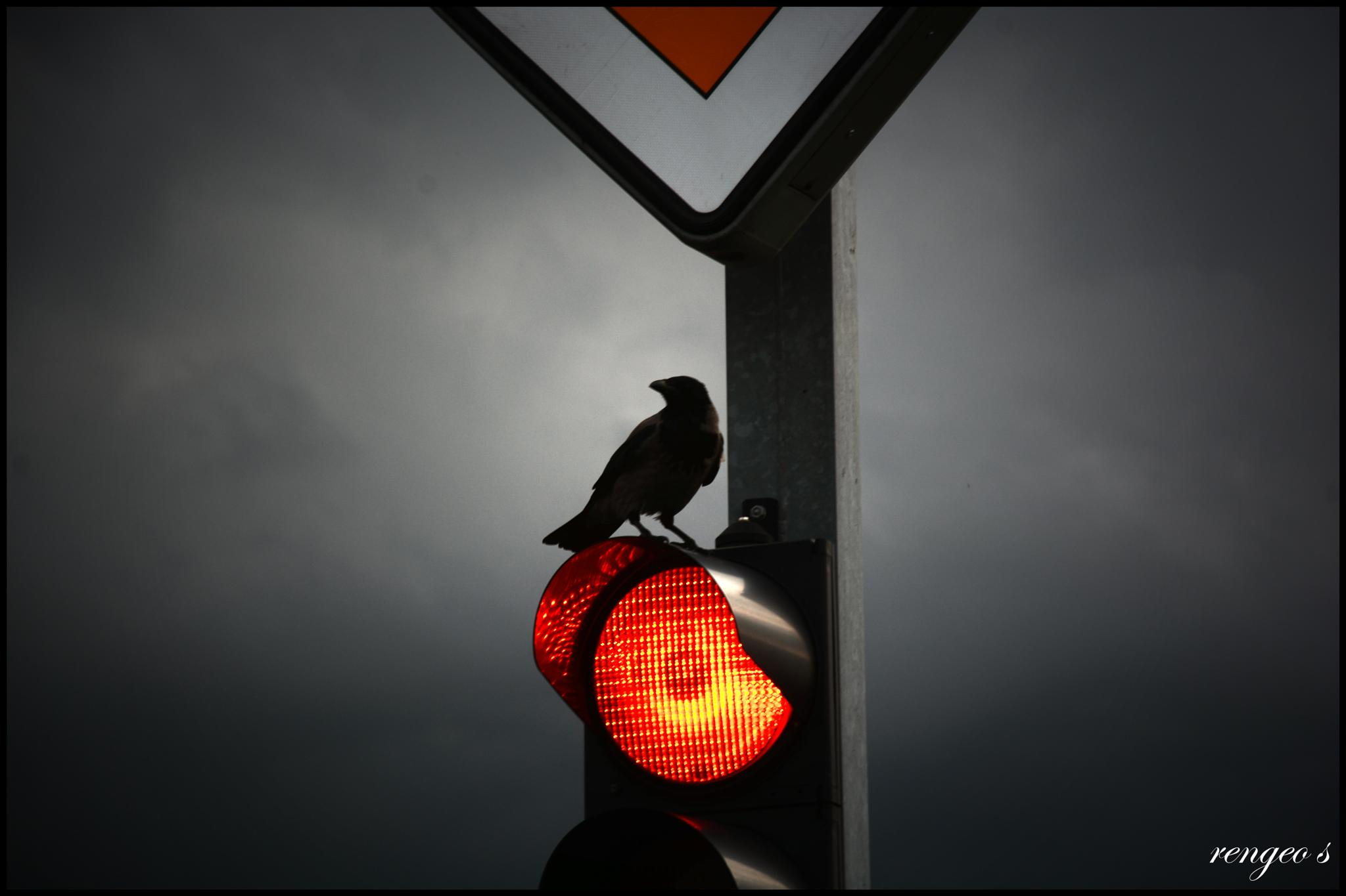 Photo in Animal #traffic light #crow #bird #storm