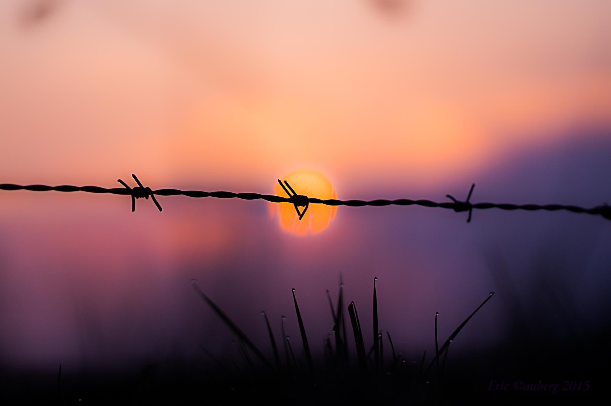 Barb wire the sun by ericau