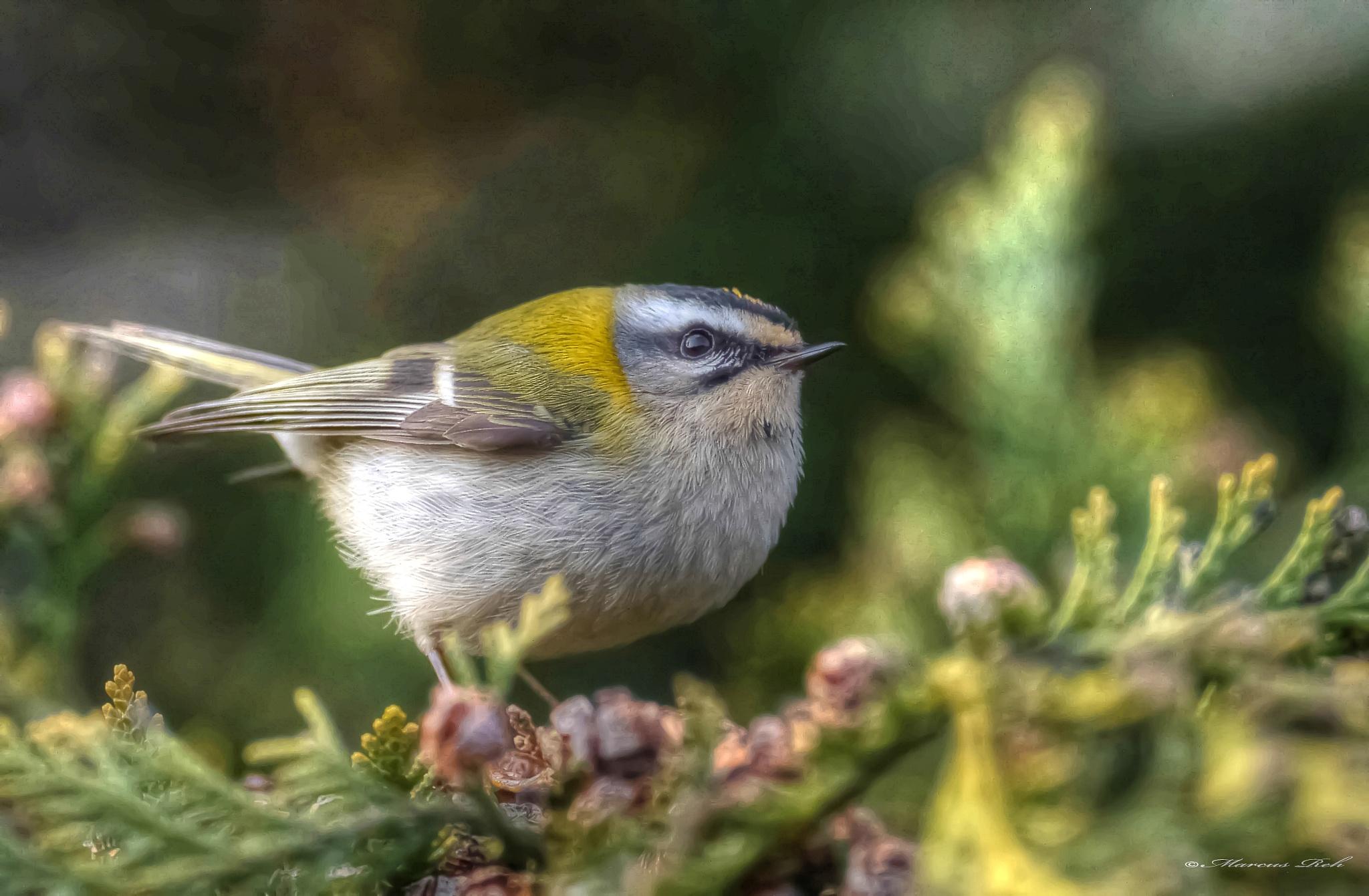 Photo in Animal #singing bird #springtime #rare birds
