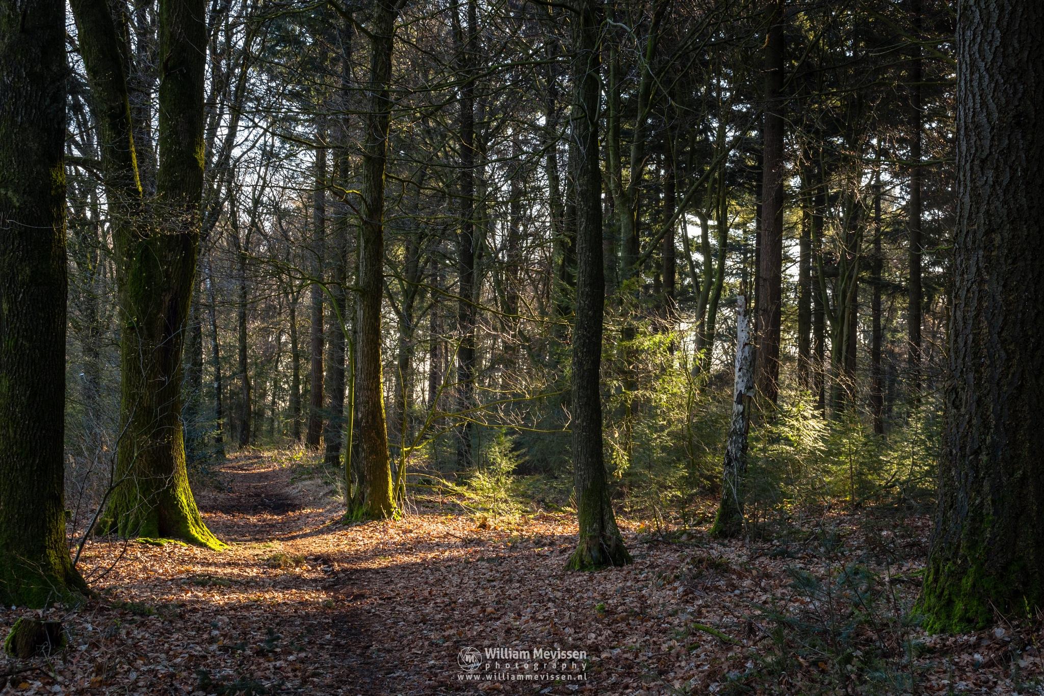 Photo in Nature #venray #limburg #noord-limburg #merselo #nature #trees #ballonzuilbossen #ballonzuil #netherlands #spring #sunrise #path