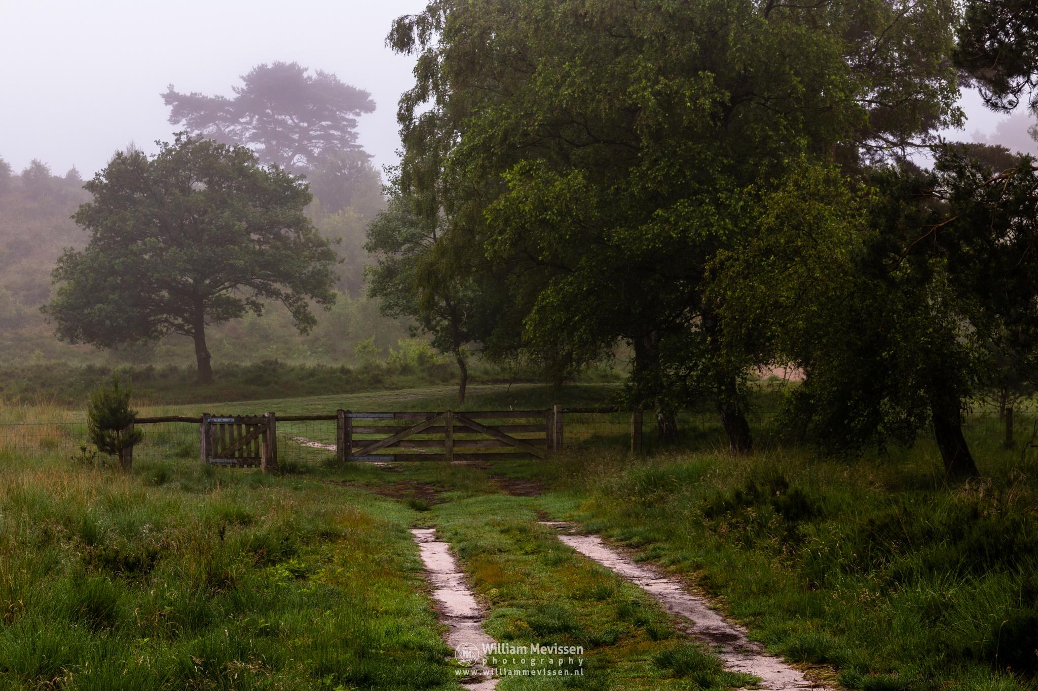 Foggy Morning Gate by William Mevissen