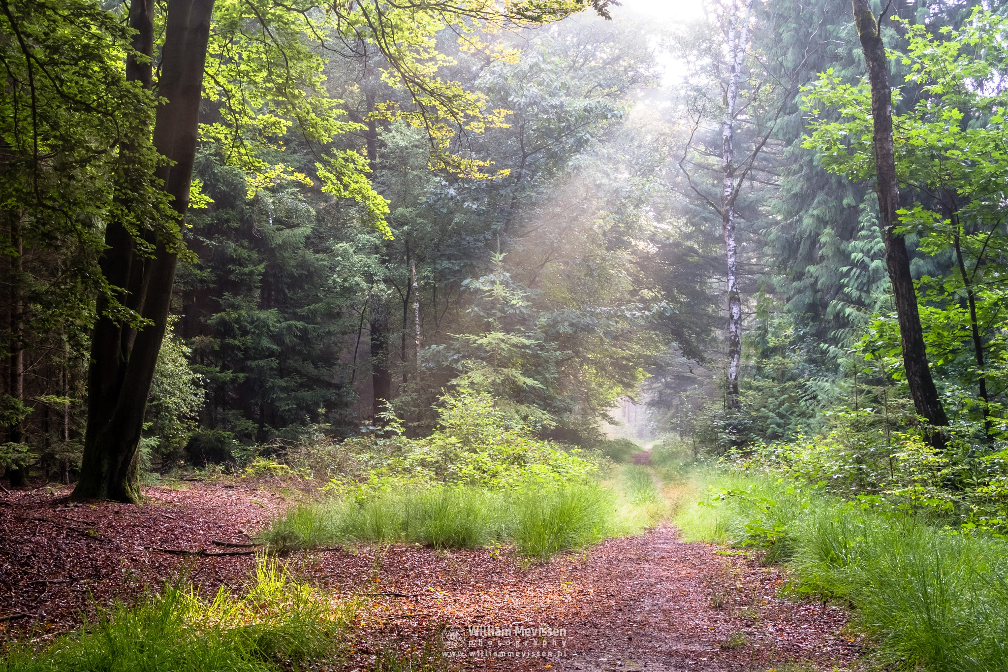 Beautiful Light In The Forest by William Mevissen