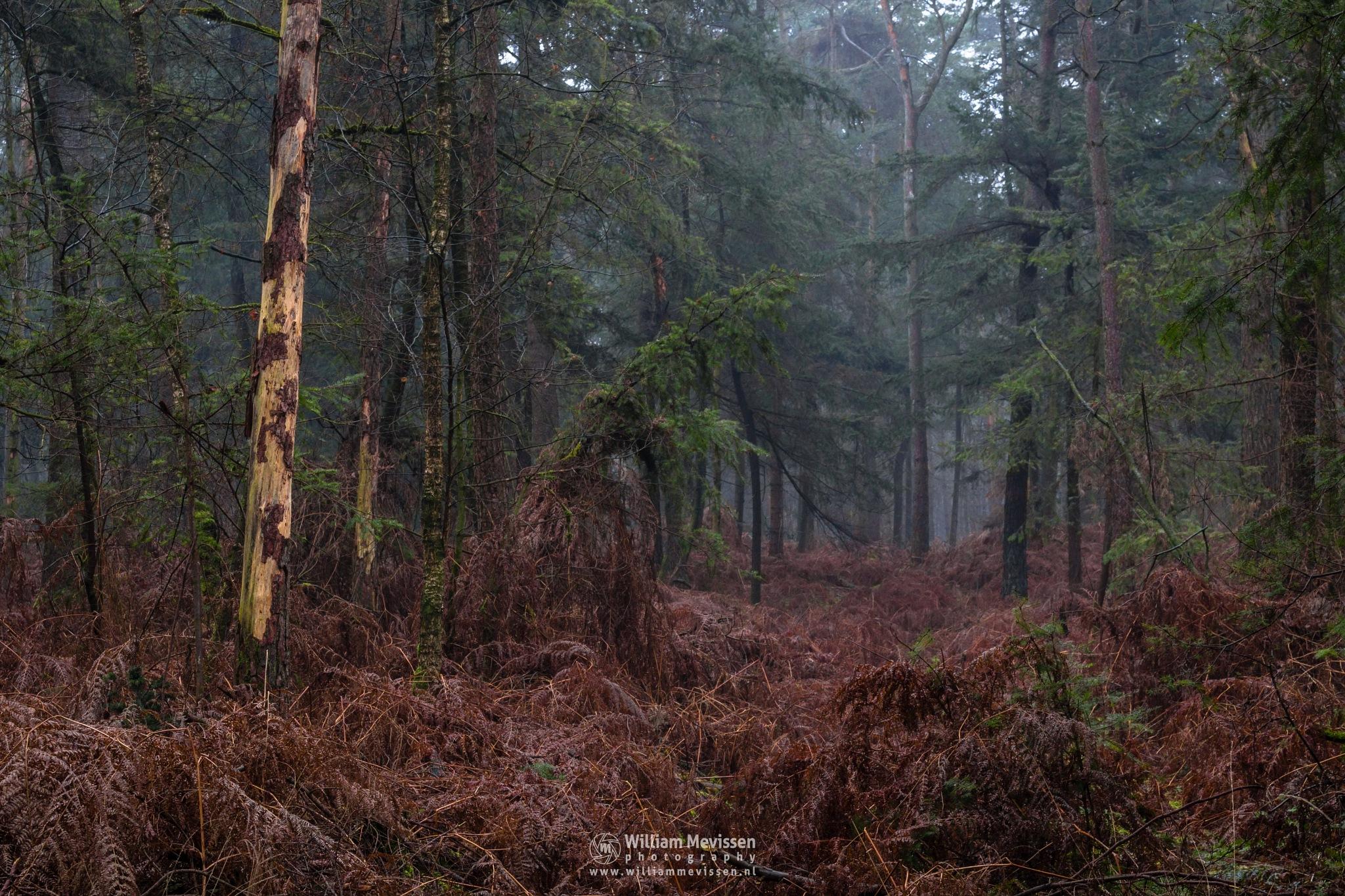 Forest Vegetation by William Mevissen