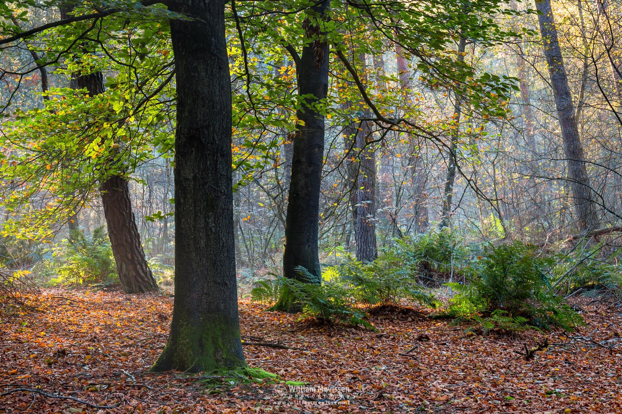 Sunny Autumn by William Mevissen