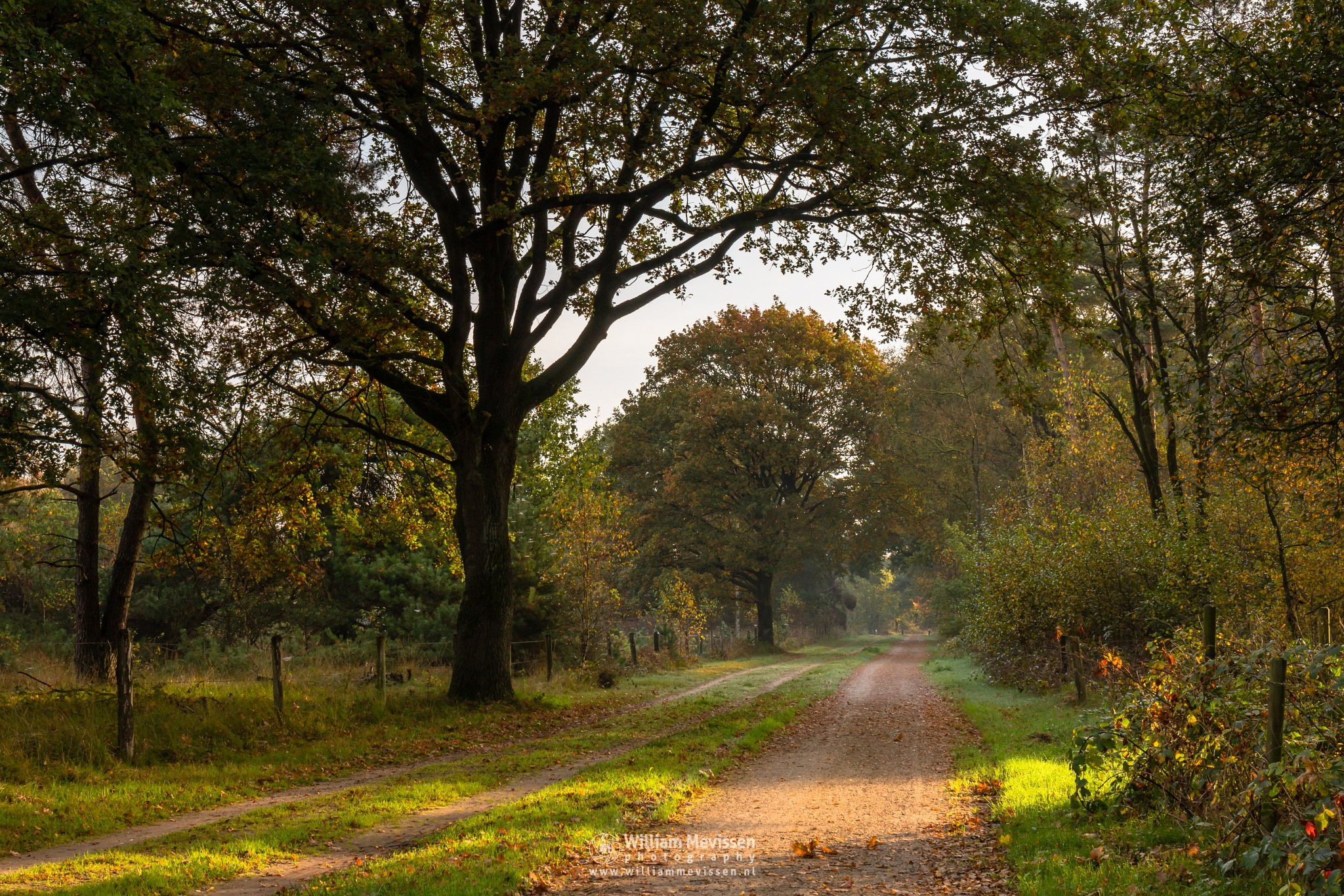 Photo in Nature #bergerheide #forest #woods #maasduinen #limburg #nature #sunrise #path #autumn #light #nieuw-bergen #noord-limburg