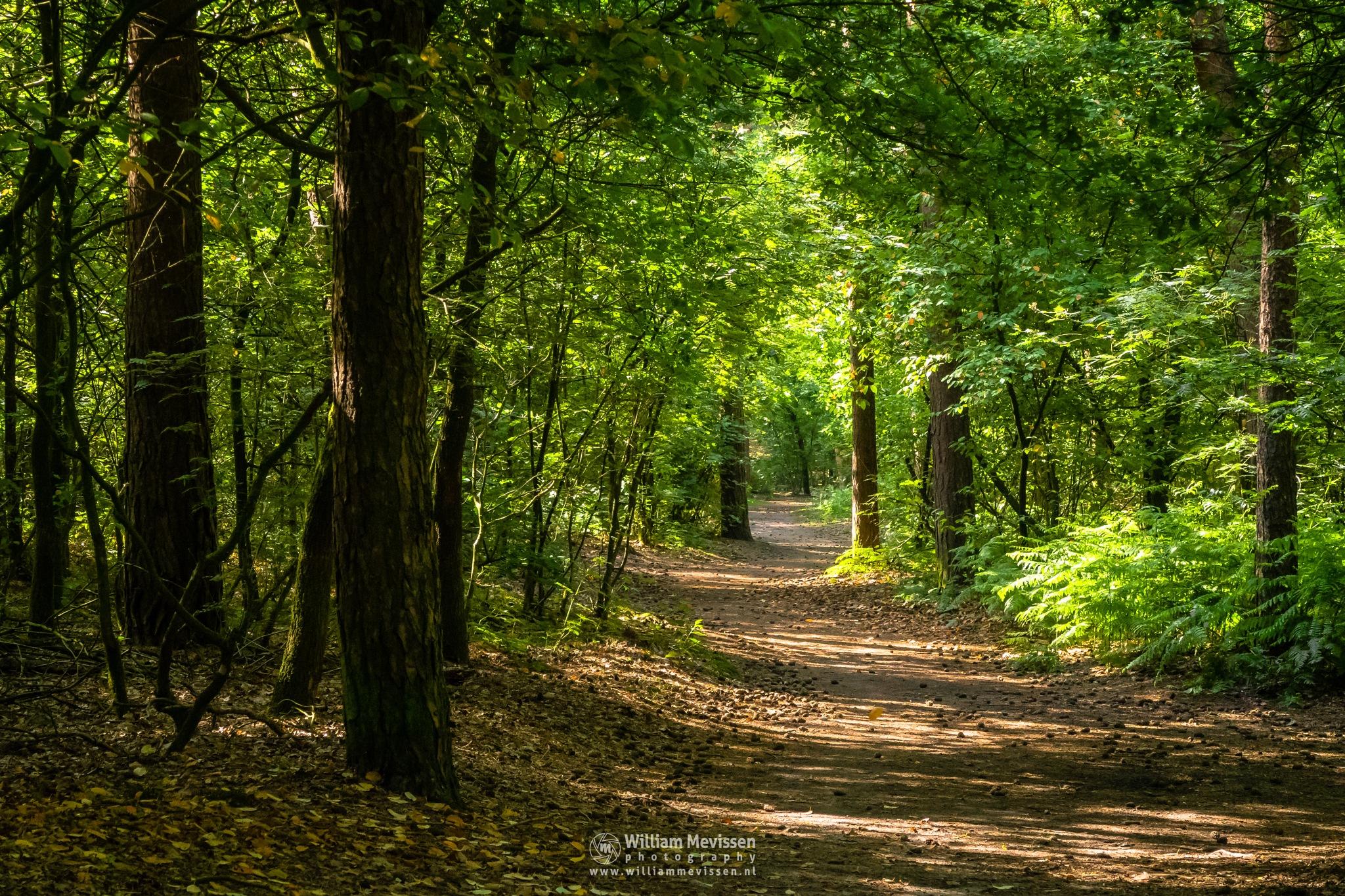 Sunny Path Vlakwater by William Mevissen