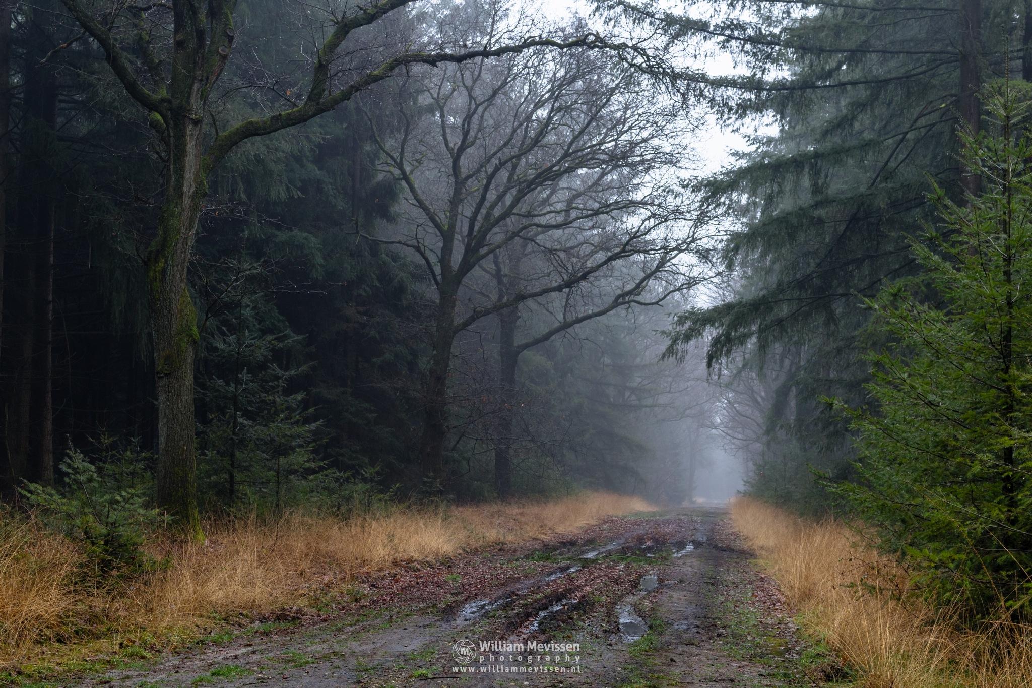 Mud Tracks by William Mevissen