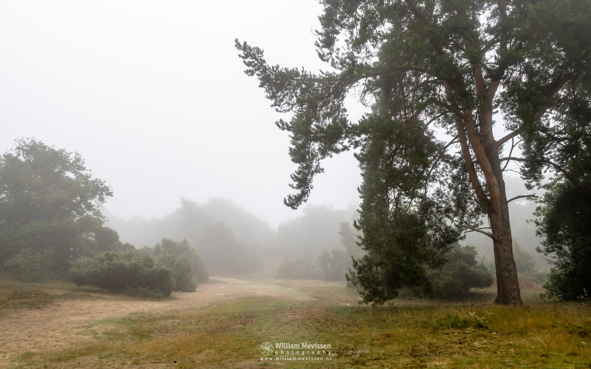 Misty Tree View by William Mevissen