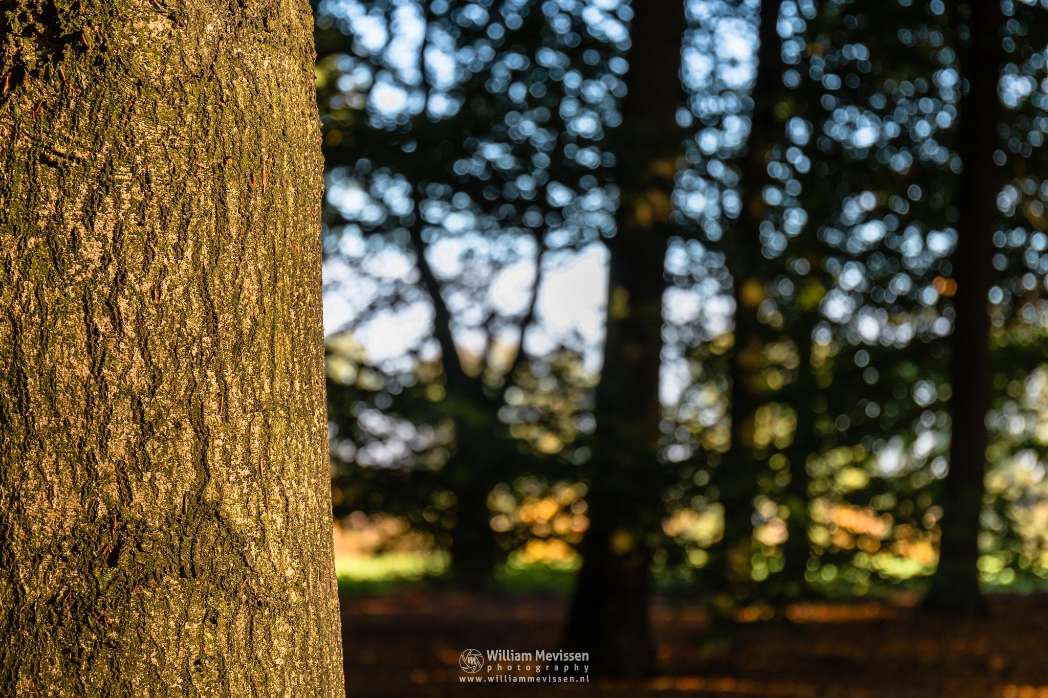 Sunny Autumn Tree Trunk by William Mevissen