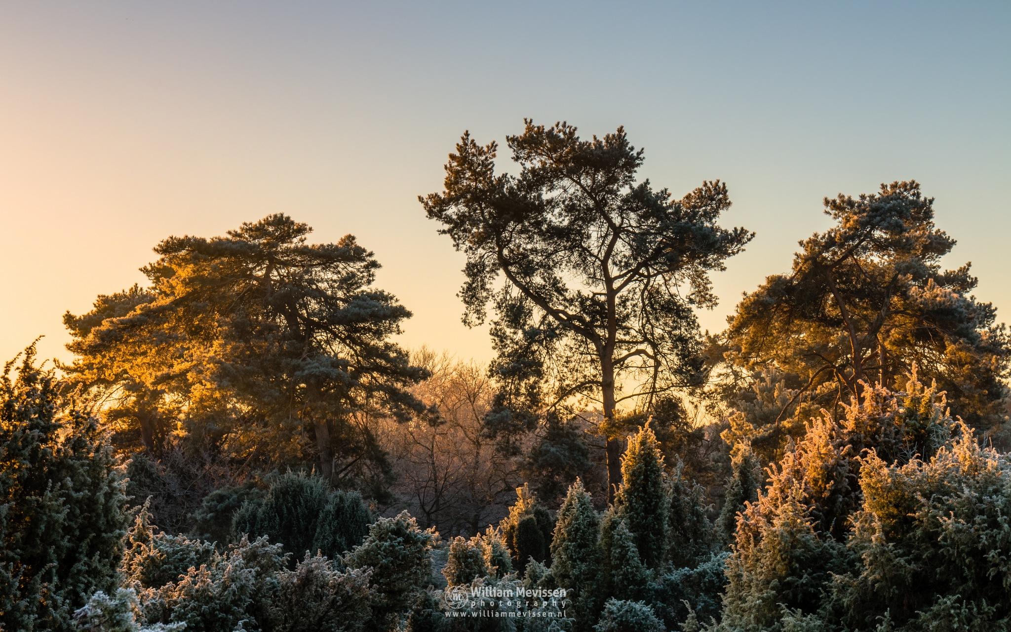 Cold Sunrise by William Mevissen