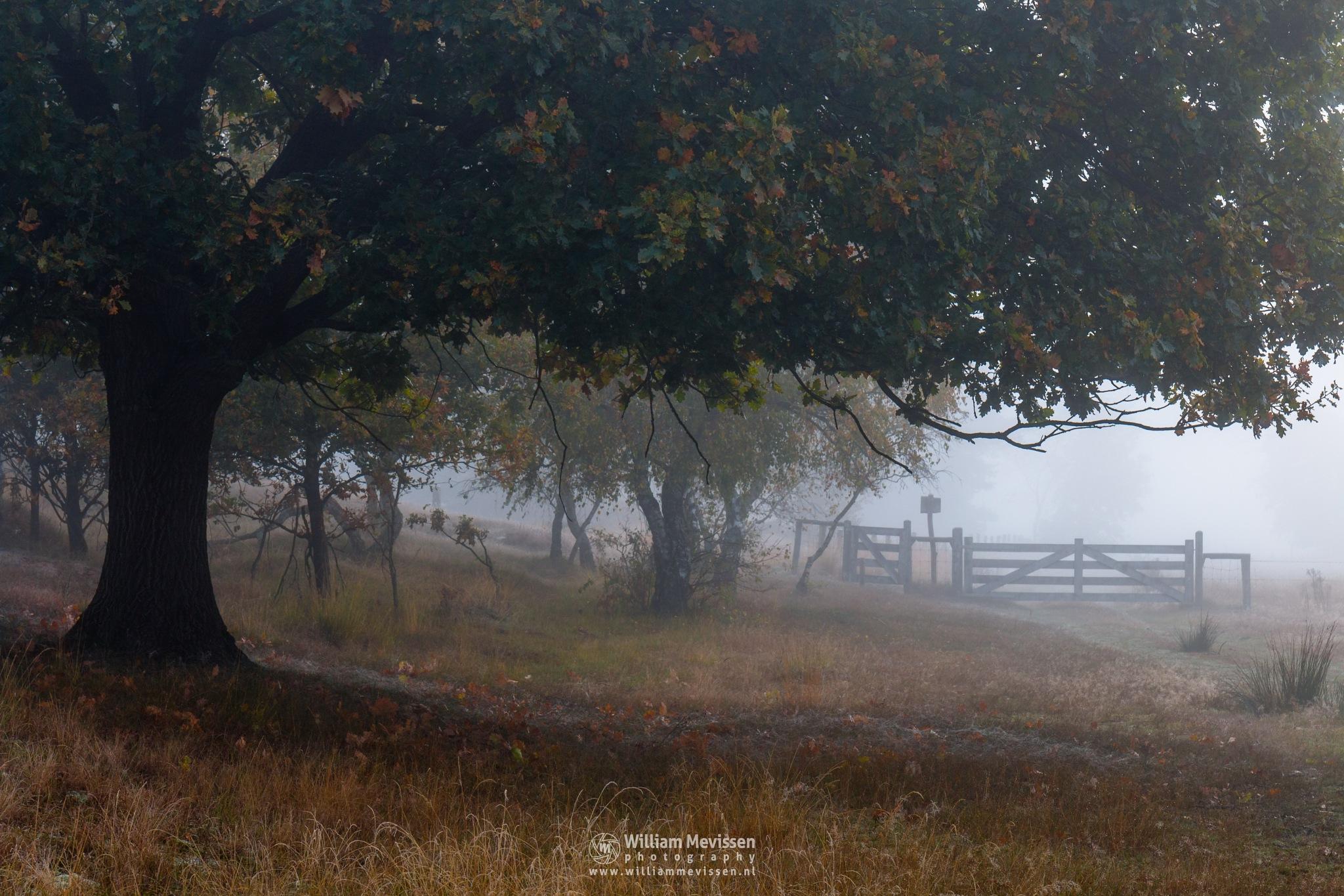 Photo in Landscape #bergerheide #forest #maasduinen #limburg #noord-limburg #nieuw-bergen #bergen #trees #heather #autumn #mist #fog #gate