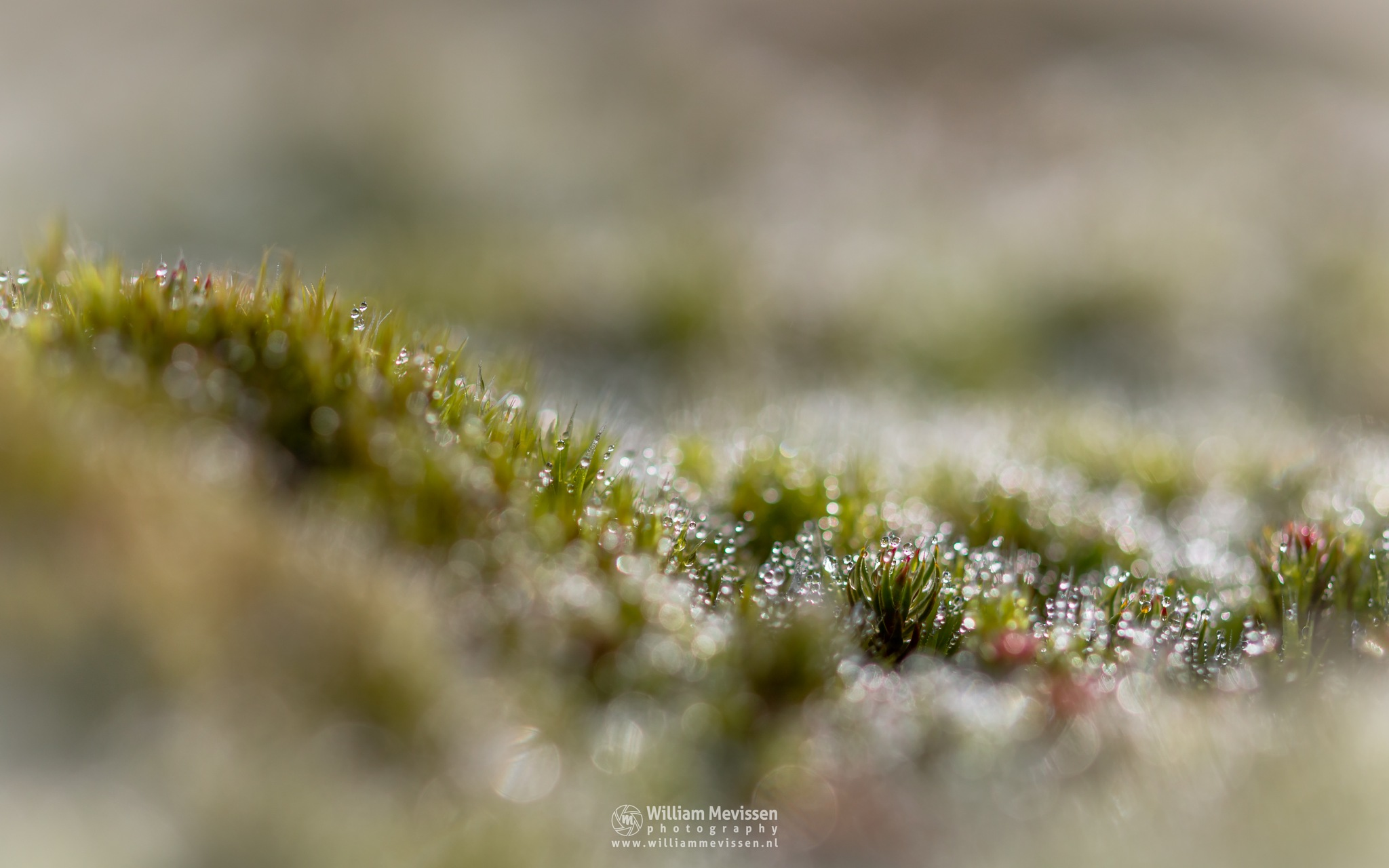 Moss & Bokeh by William Mevissen