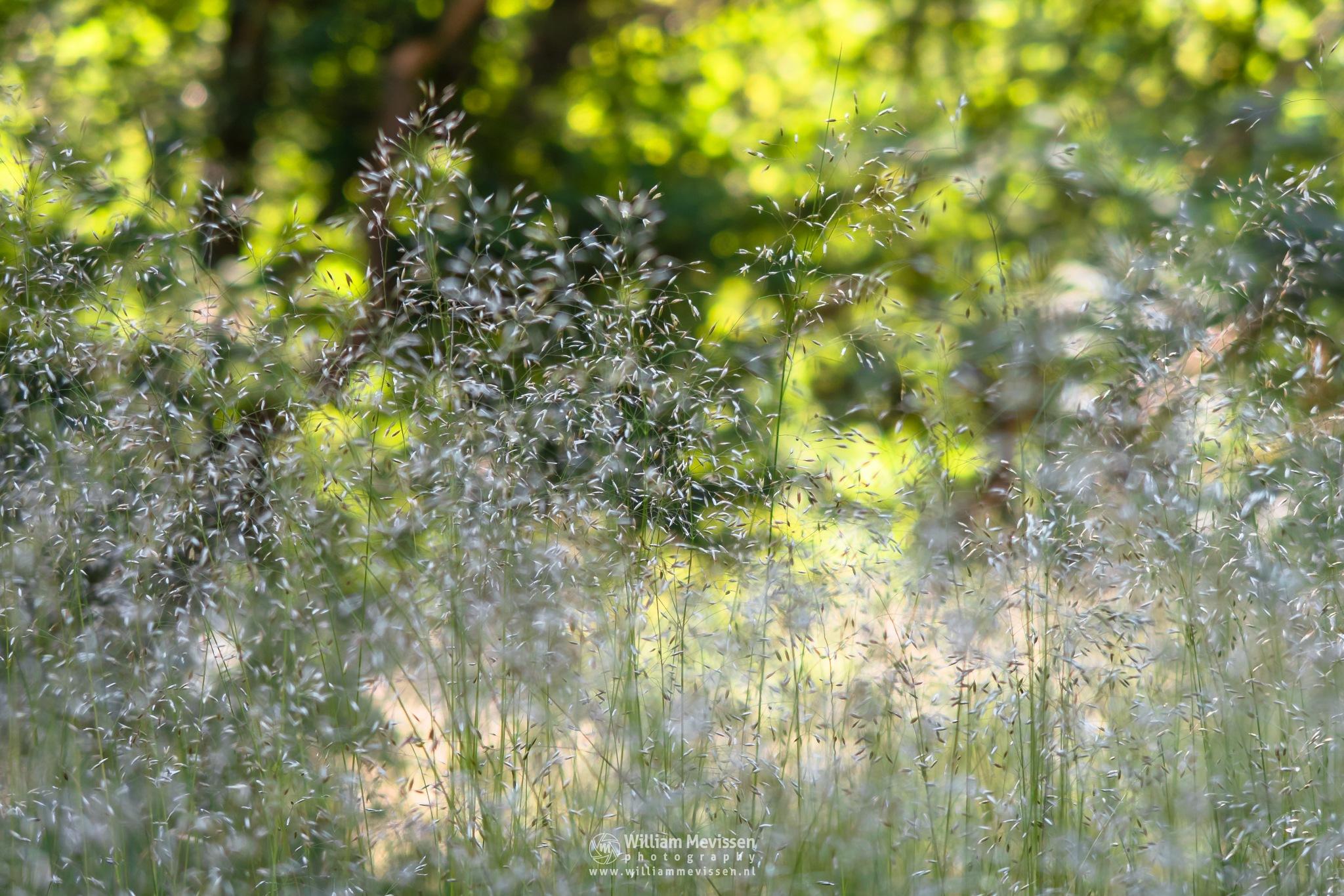Grass Bokeh Forest by William Mevissen