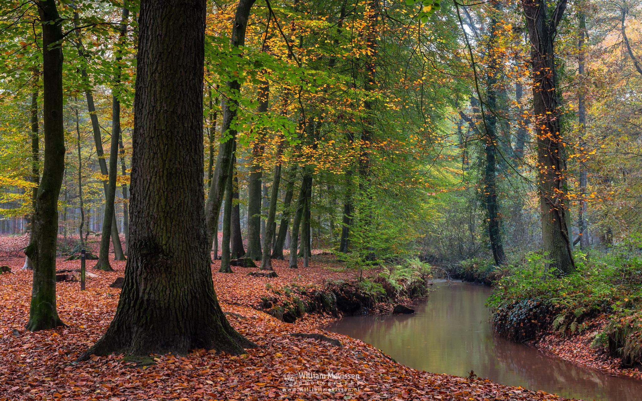 Photo in Nature #geijsteren #venray #oostrum #landgoed geijsteren #limburg #noord-limburg #nature #forest #woods #geysteren #autumn #trees #fall #brook