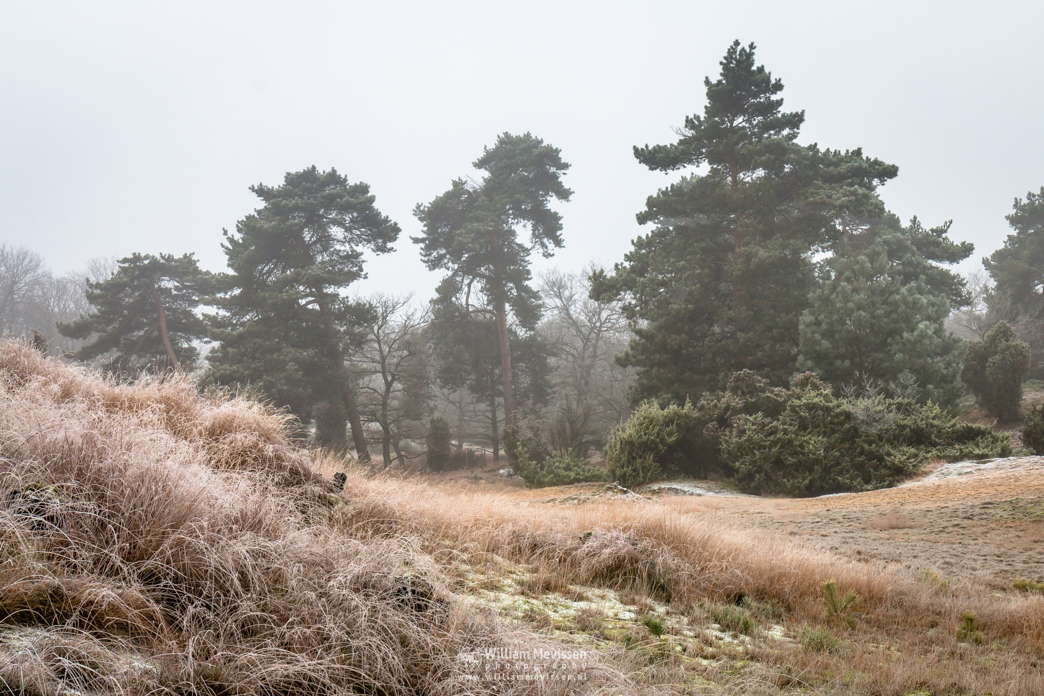 Frosty Cold View by William Mevissen