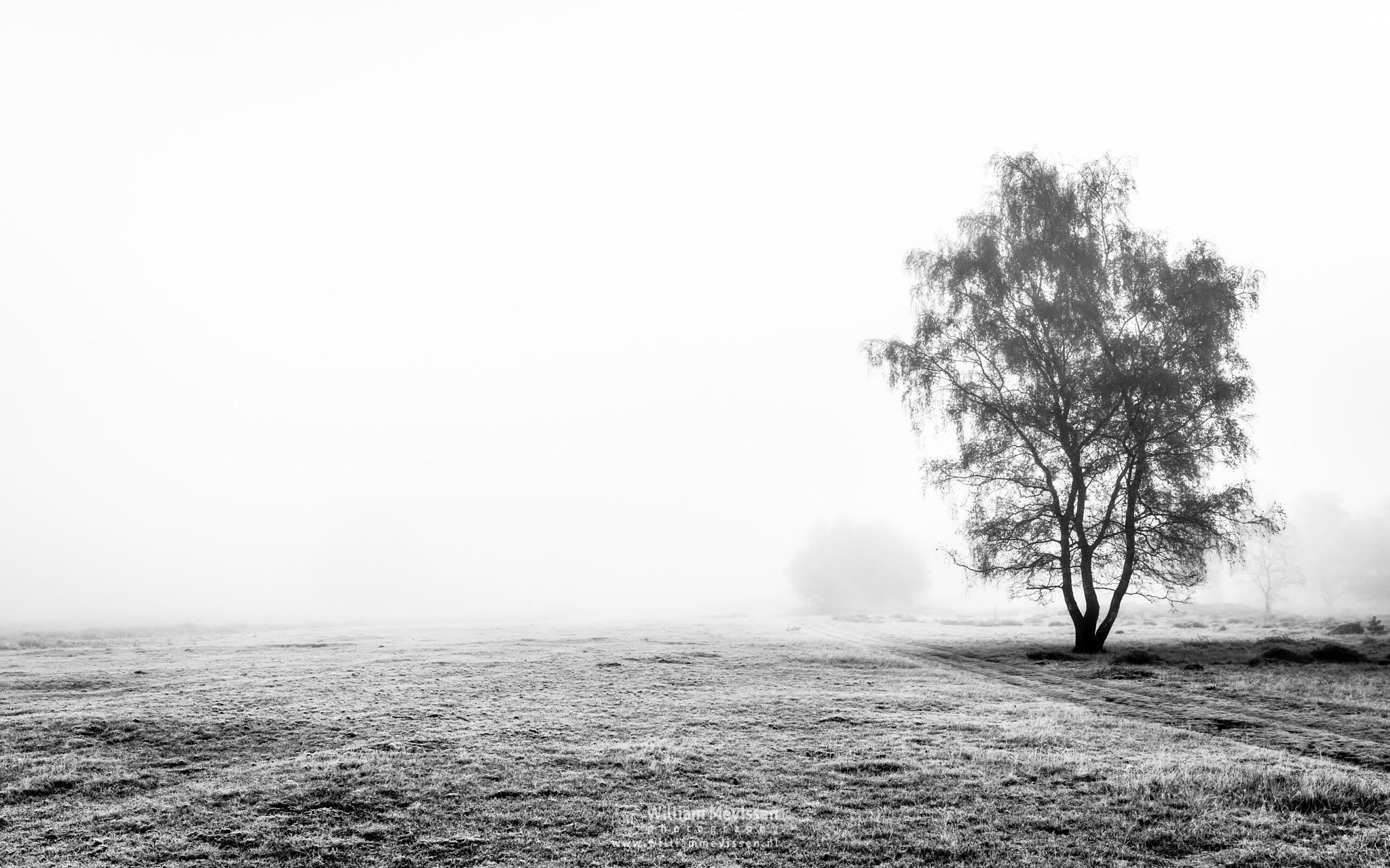 Misty Silhouettes Bergerheide by William Mevissen