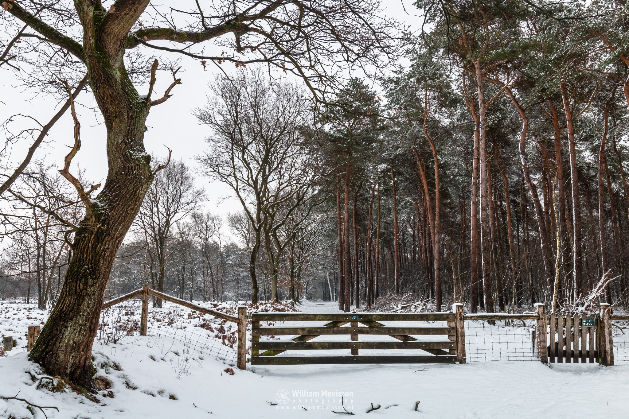 Gate Into The Winter Forest by William Mevissen