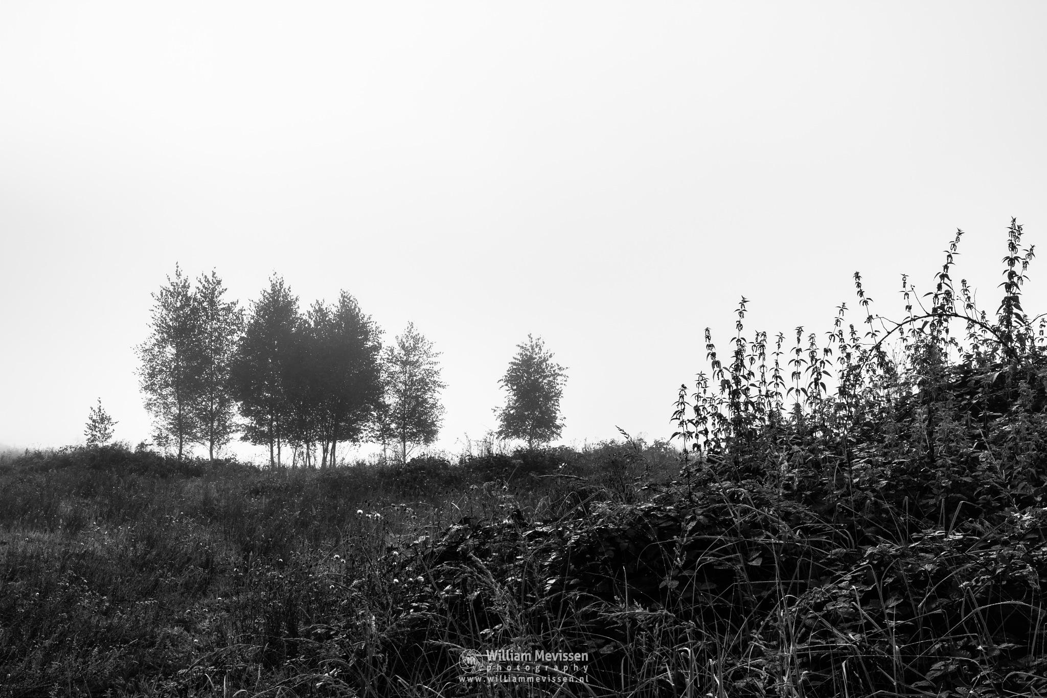 Misty Silhouettes by William Mevissen