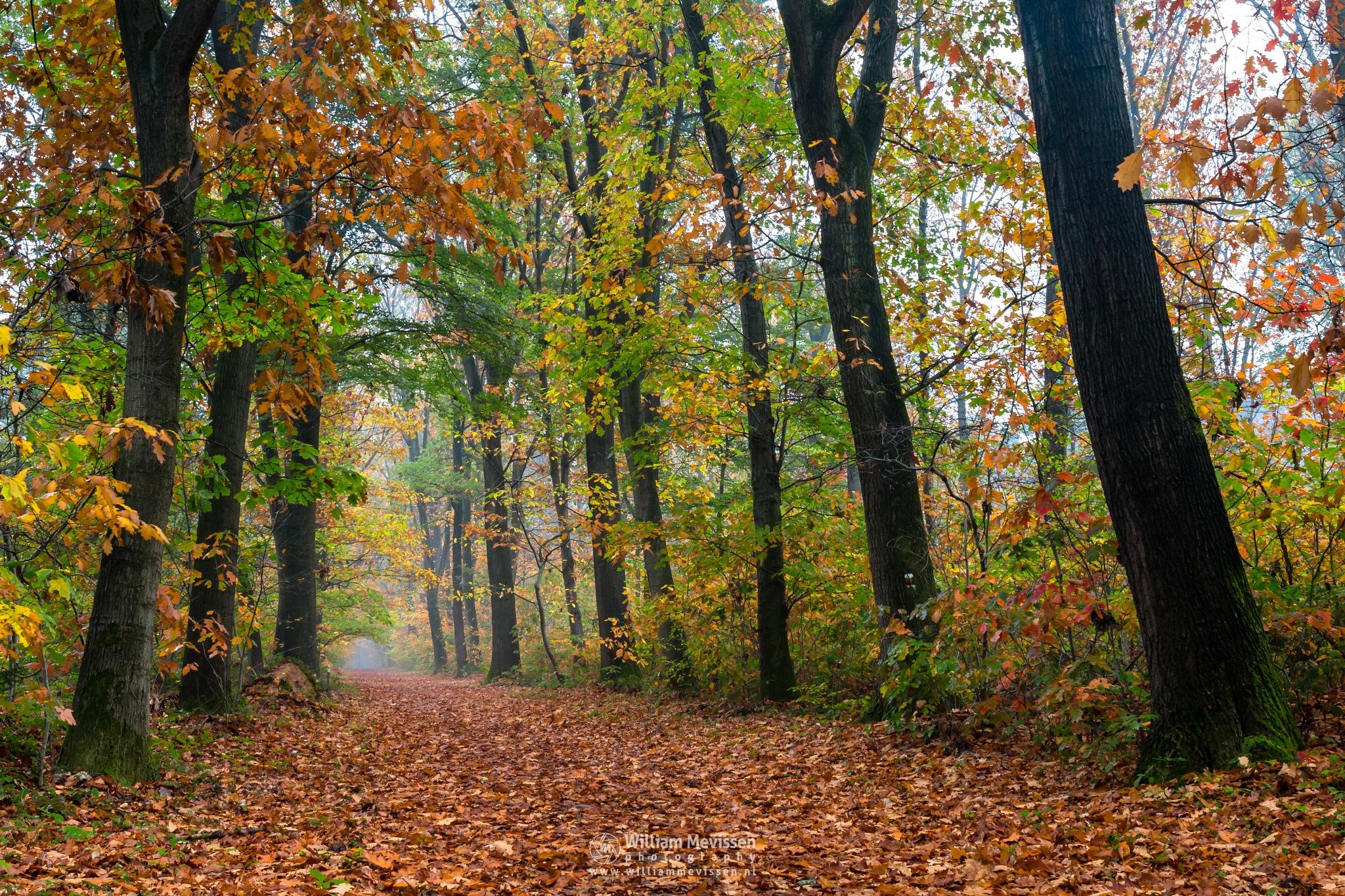 Autumn Funnel by William Mevissen