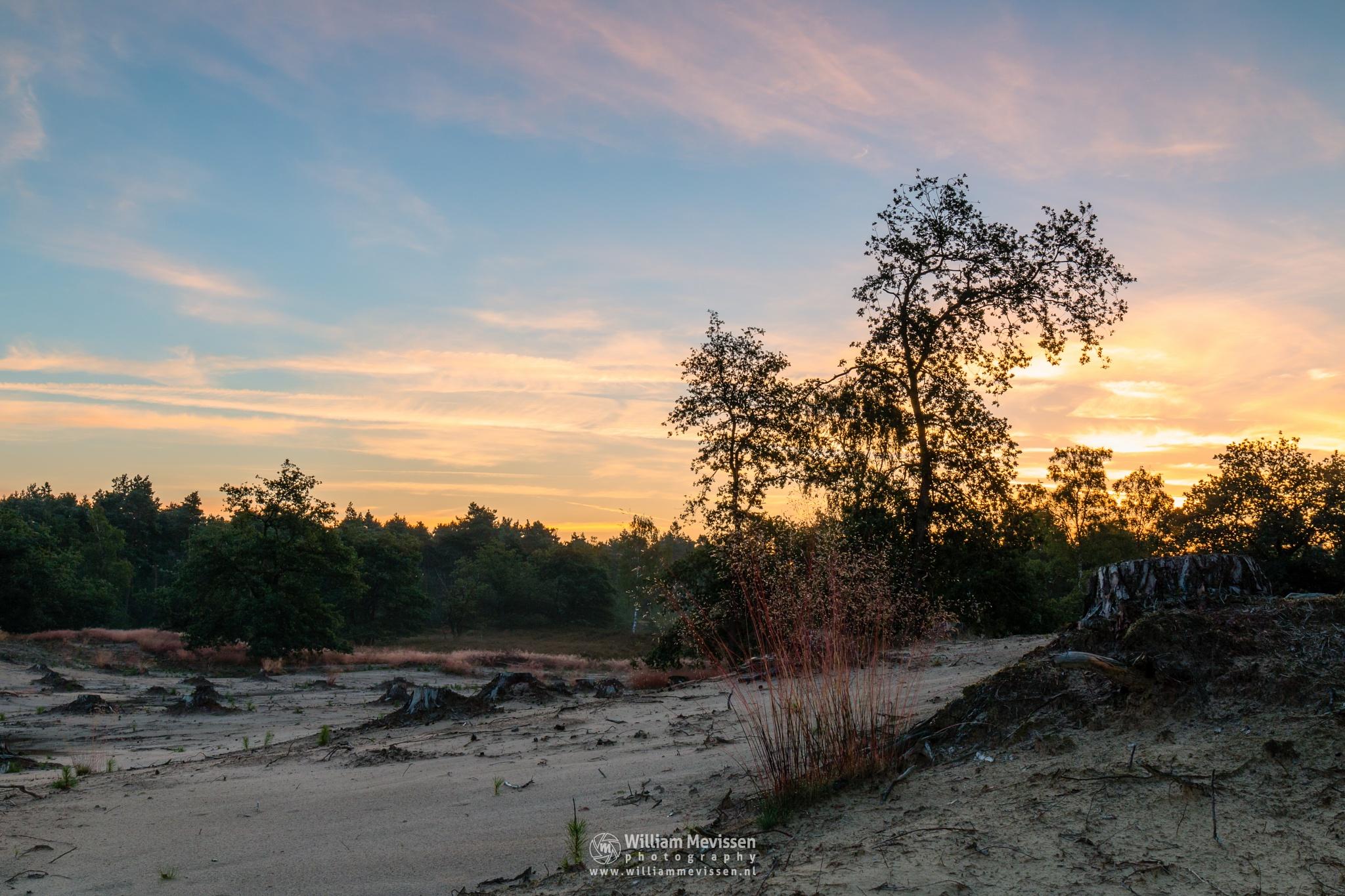 Sunrise Silhouettes & Colors by William Mevissen