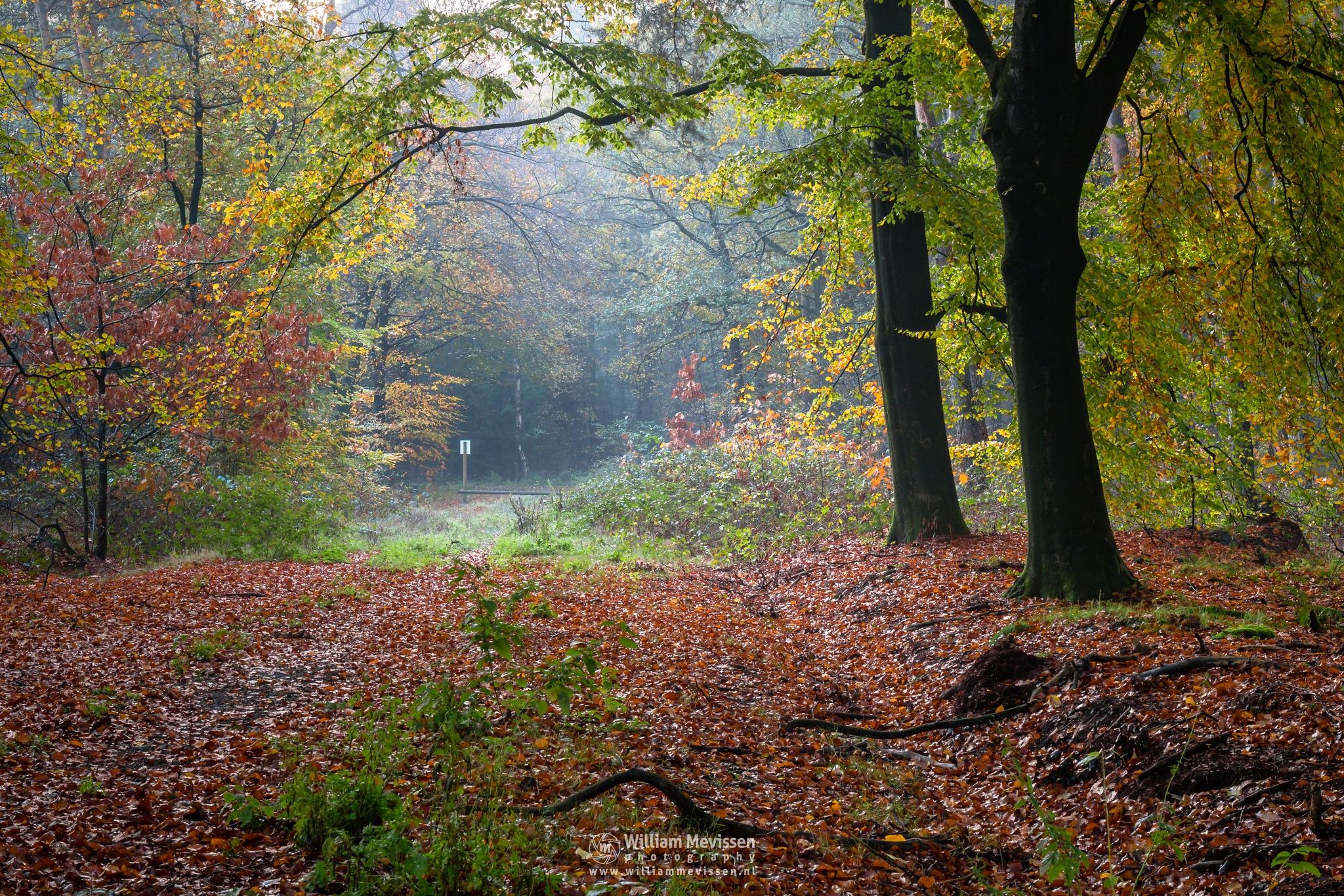 Autumn Sign by William Mevissen