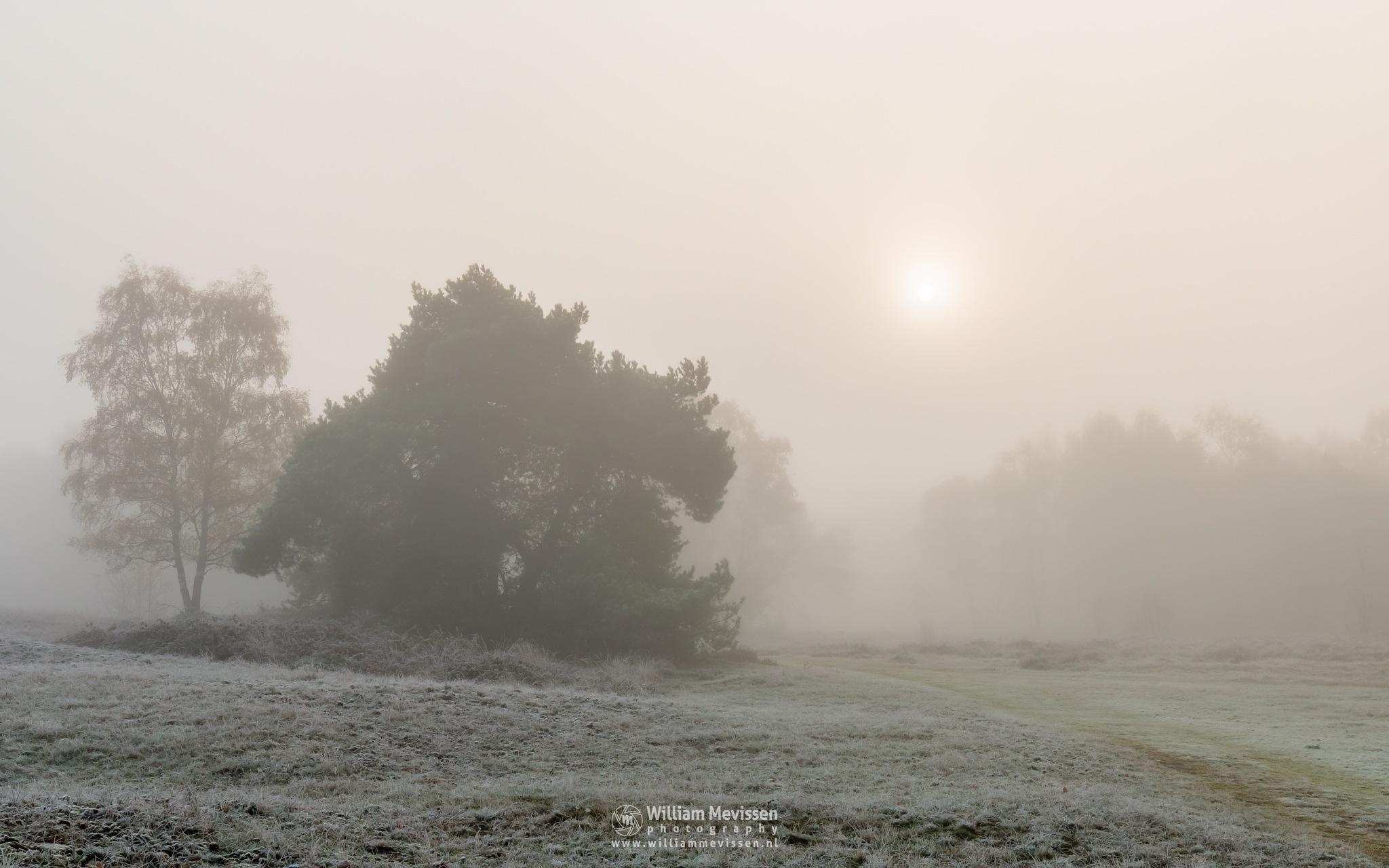 Frosty Autumn Sun by William Mevissen