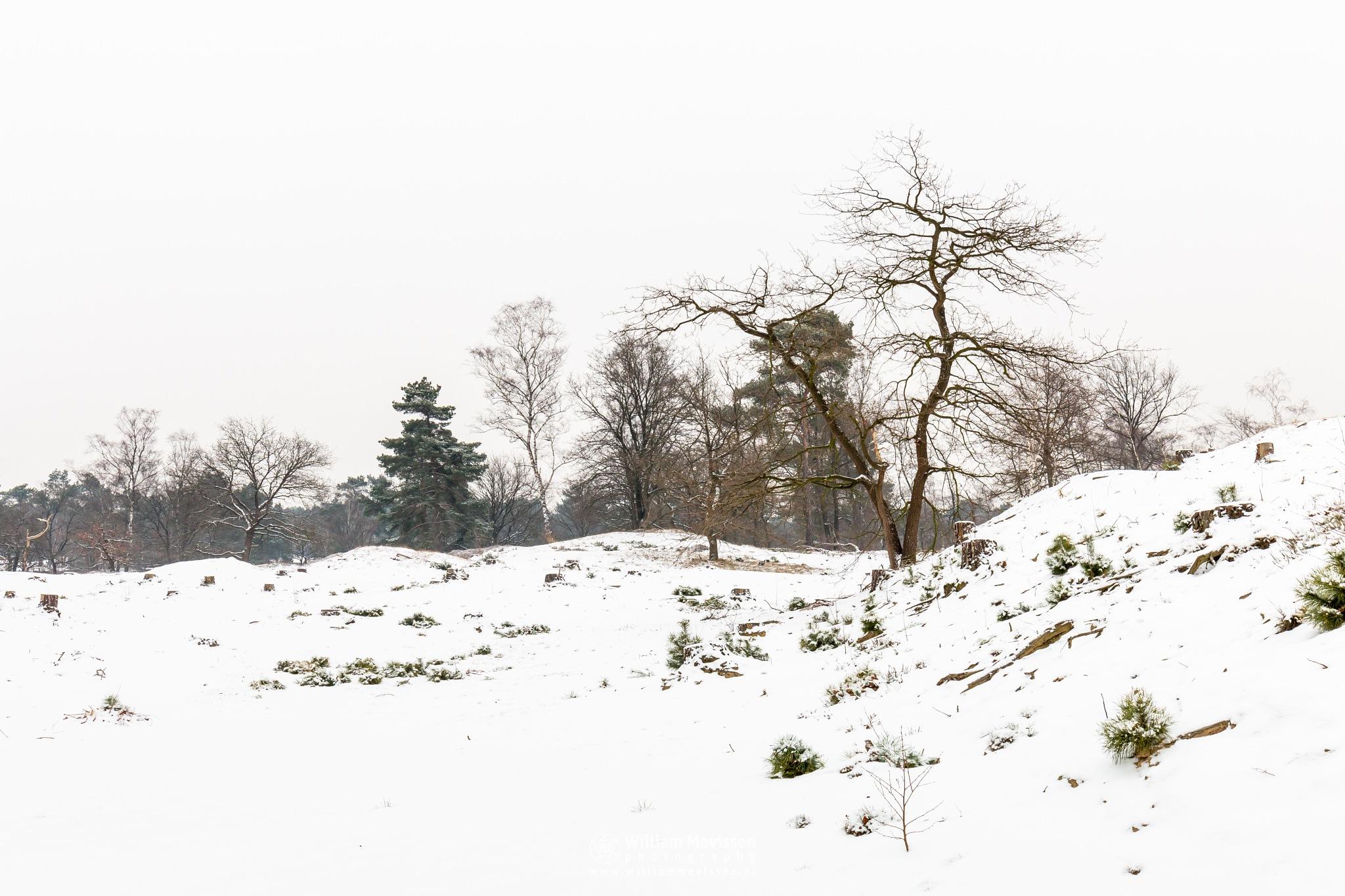 Snow Dunes by William Mevissen