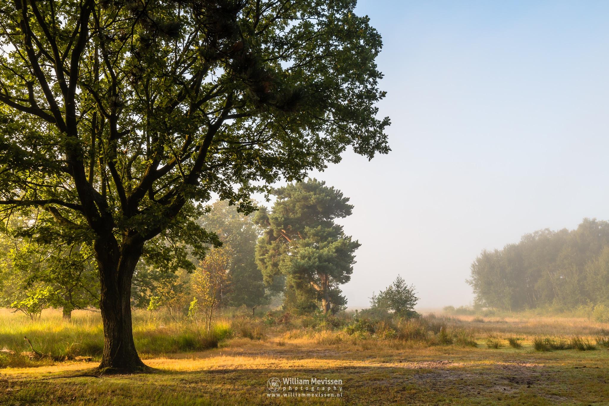 Misty Morning Light by William Mevissen