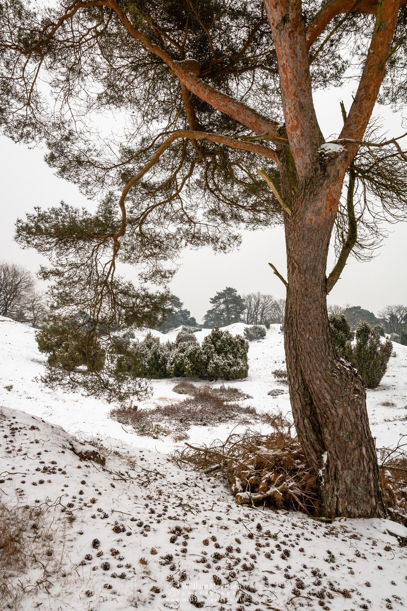 White Winter Tree View by William Mevissen
