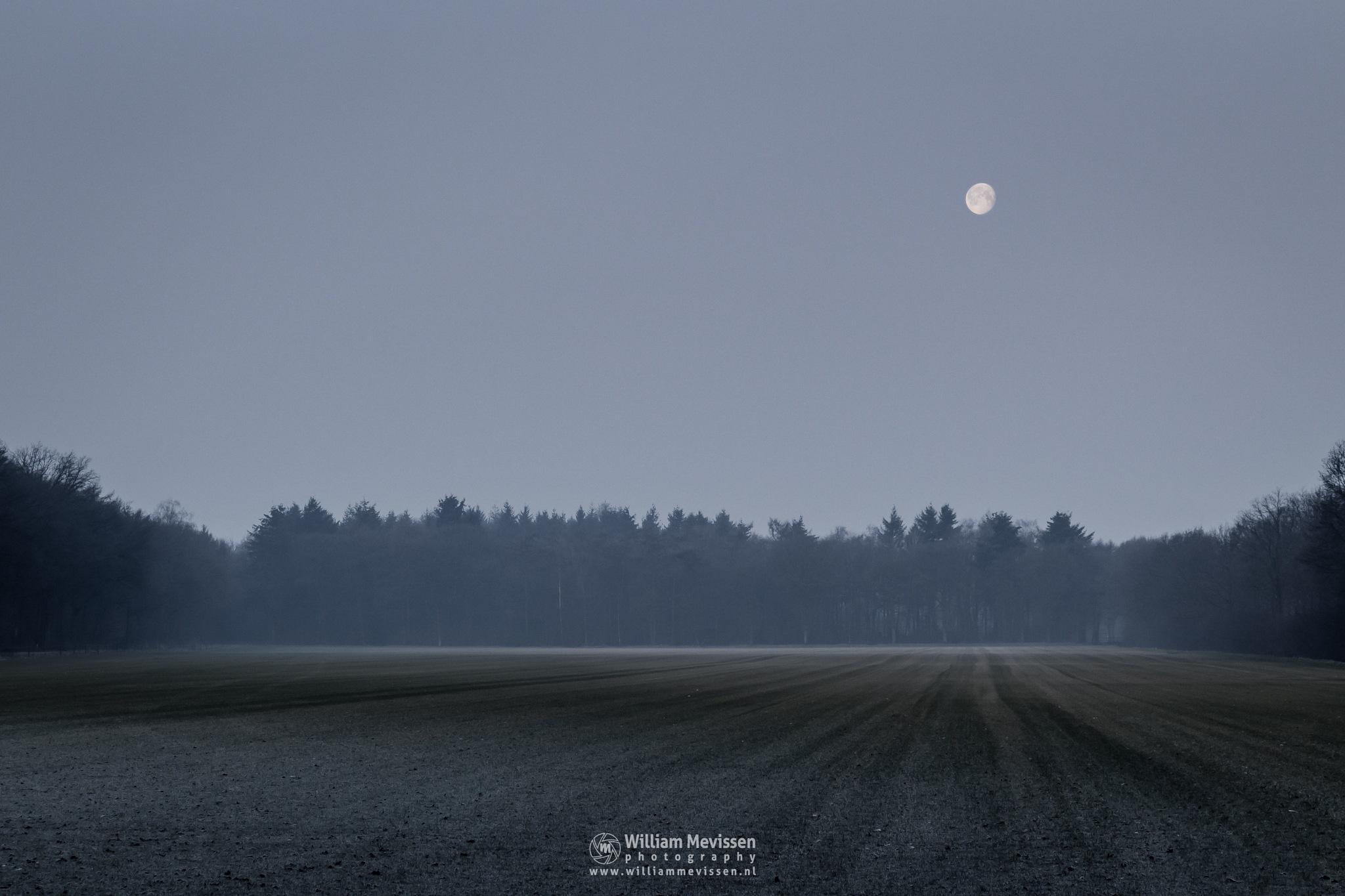 Moonlight Field by William Mevissen