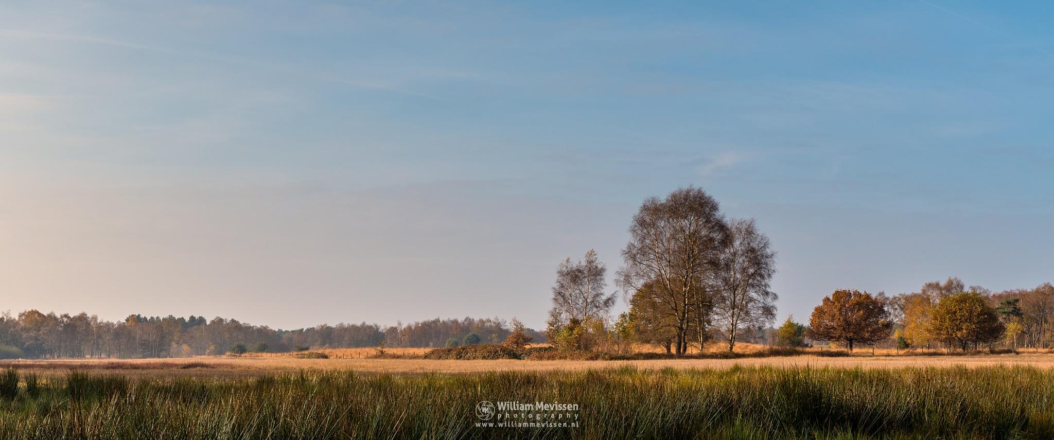 Panorama Autumn Bergerheide by William Mevissen