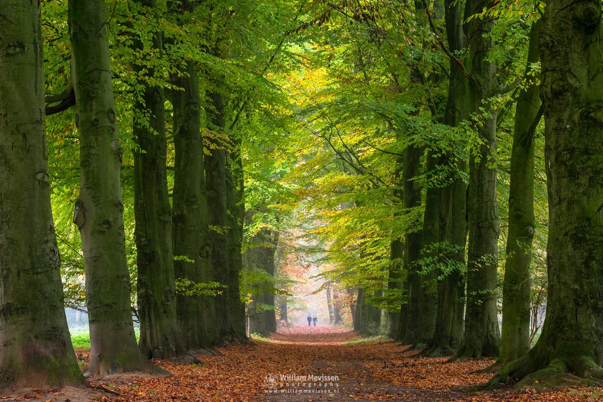 Misty Autumn Morning Walking by William Mevissen