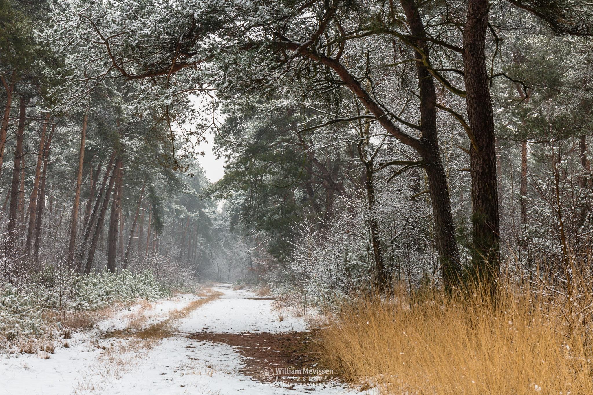 Path Of Snow by William Mevissen