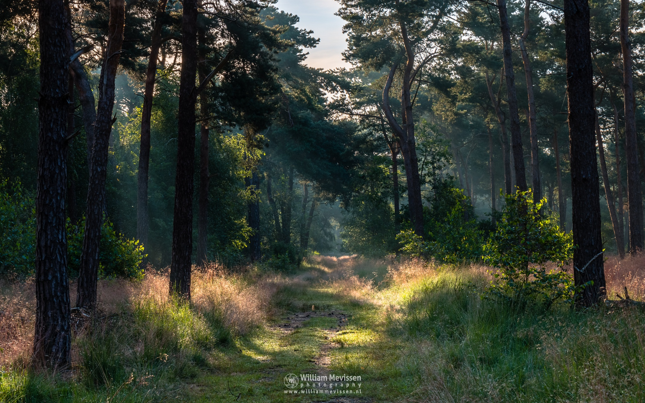 Path Of Light by William Mevissen