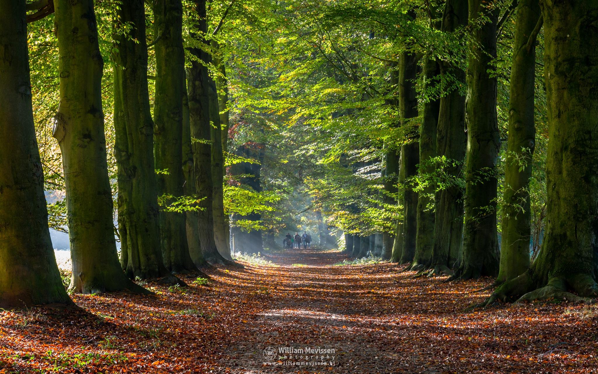 Green Autumn Stroll by William Mevissen