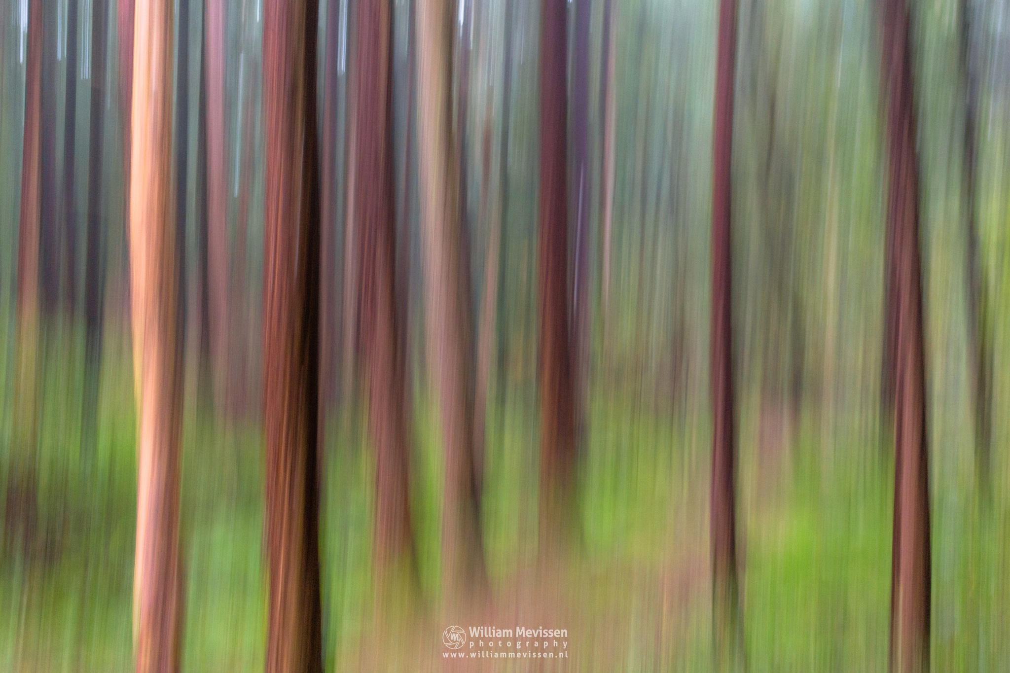 Abstract Forest by William Mevissen