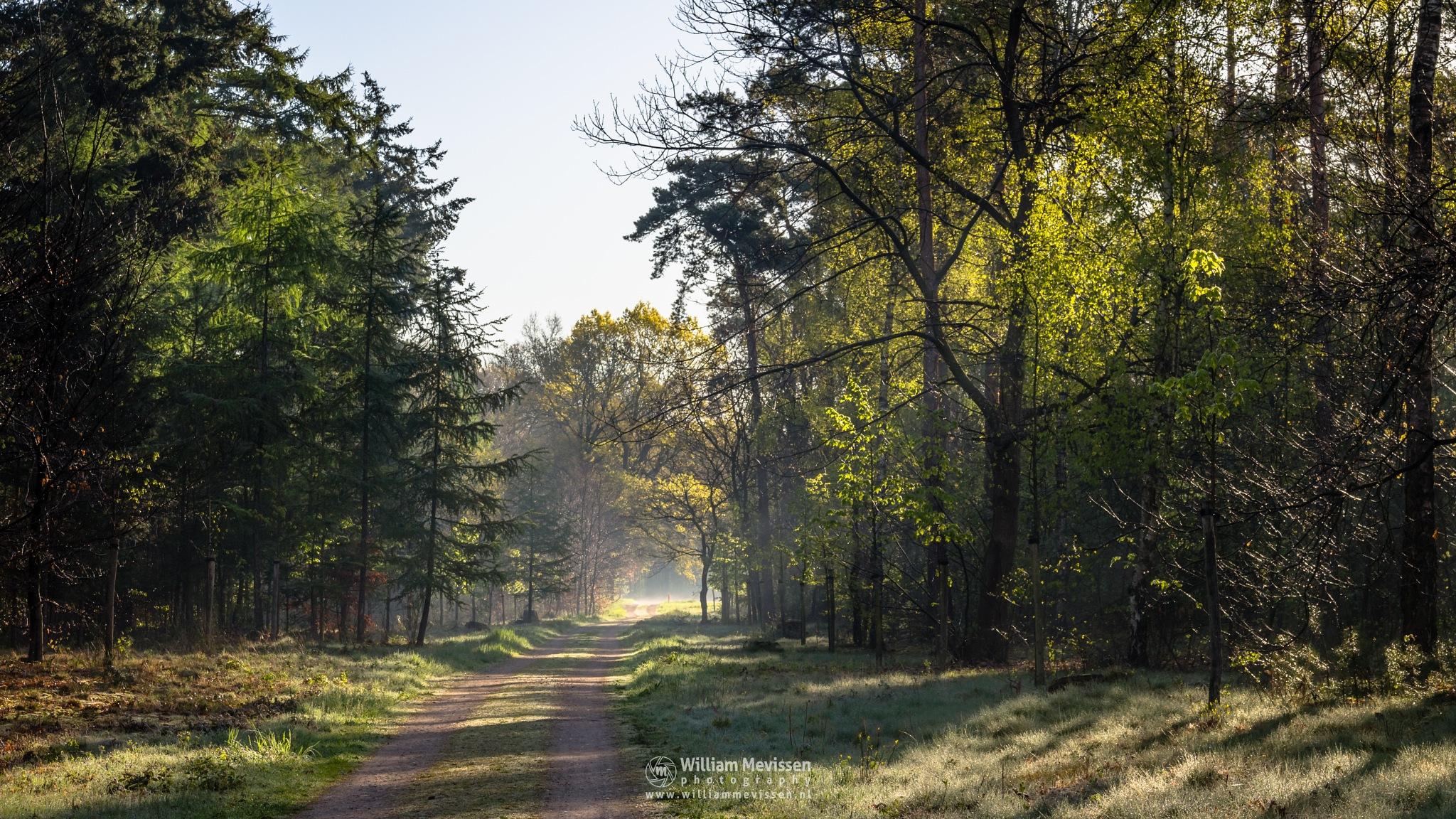 Spring Path by William Mevissen