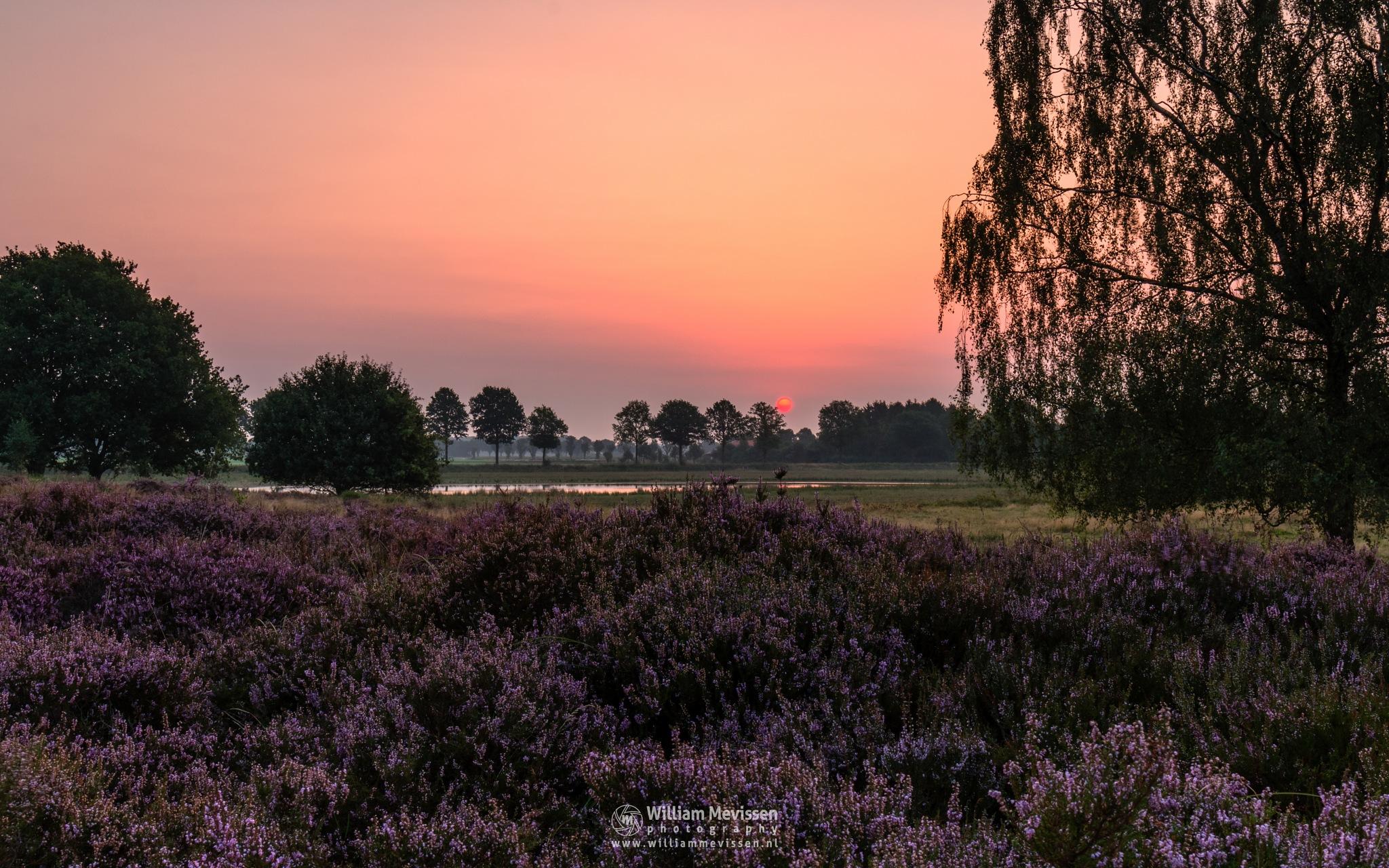 Grey Sunrise by William Mevissen