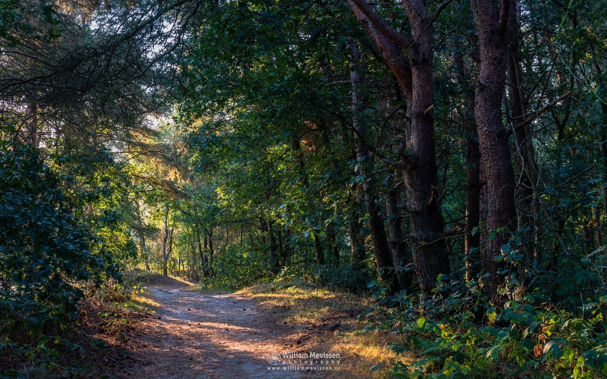 Sunrise Forest Path by William Mevissen