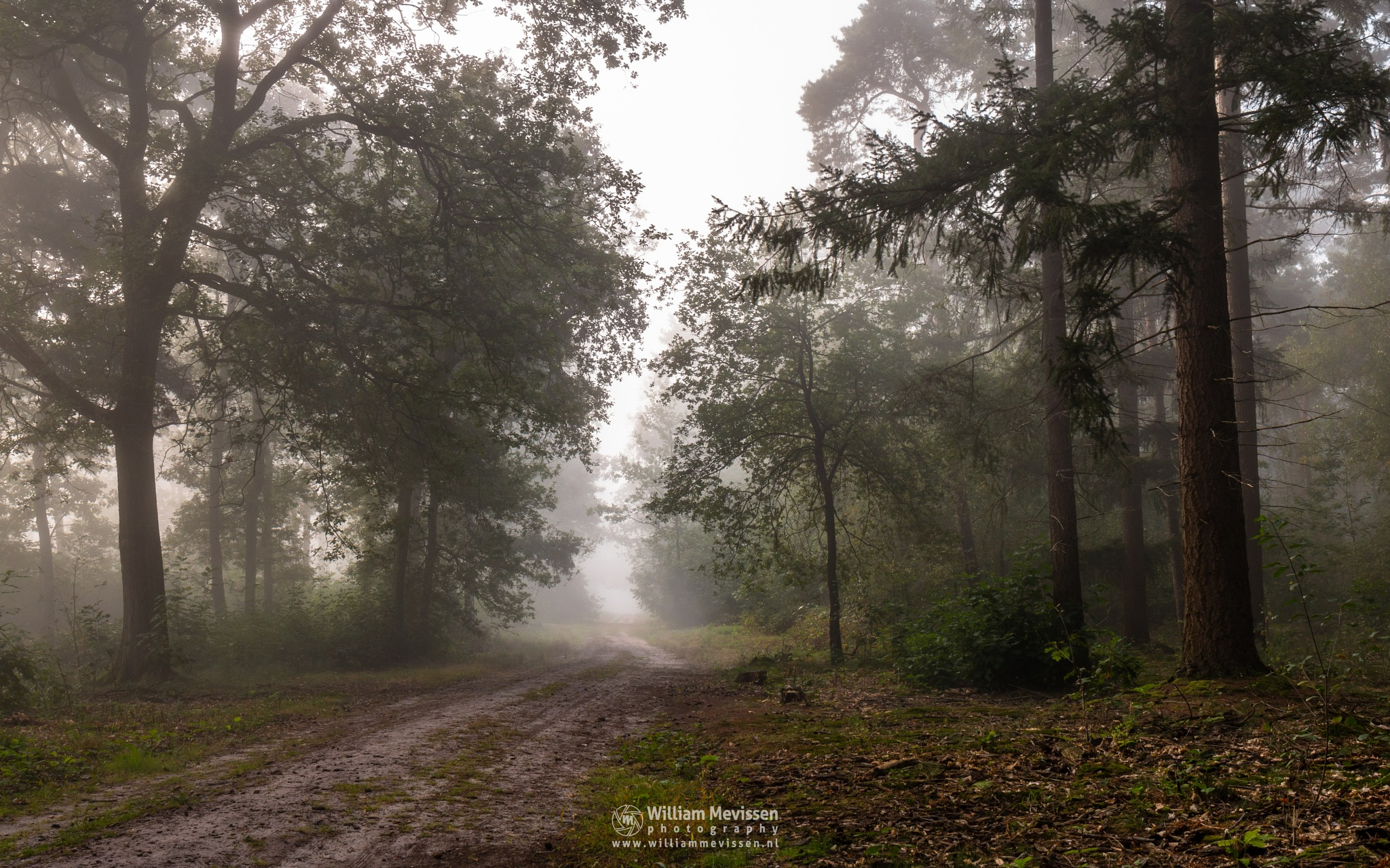 Forest Path Into The Mist by William Mevissen