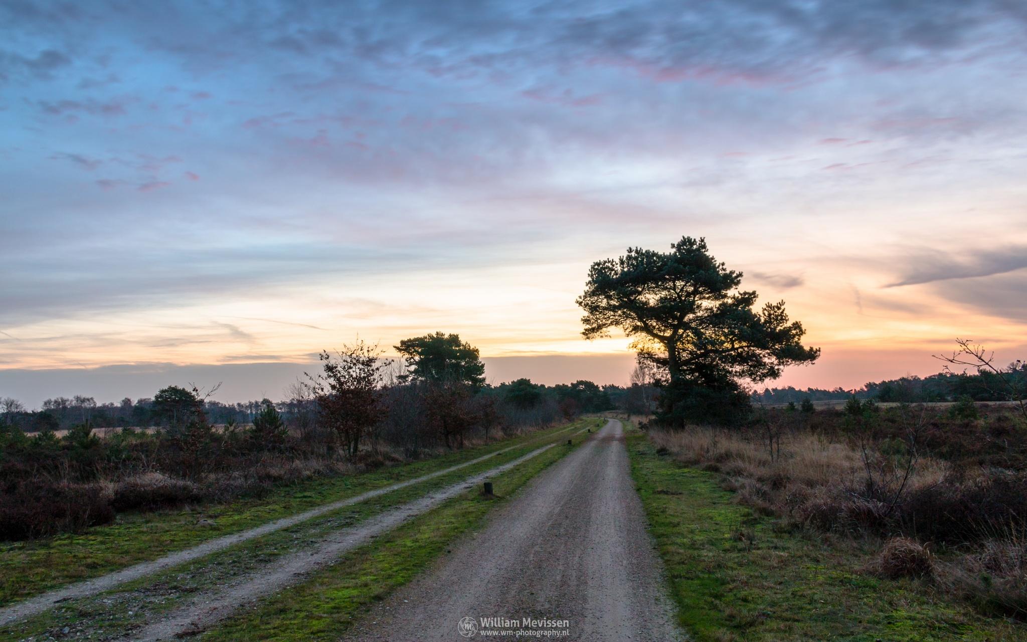Photo in Landscape #bergerheide #heathland #forest #maasduinen #limburg #noord-limburg #woods #nieuw-bergen #bergen #national park #nature #sand #tree #sky #clouds #purple #twilight #dawn #dirt road #road #bend #path #trees #sanddunes #dunes