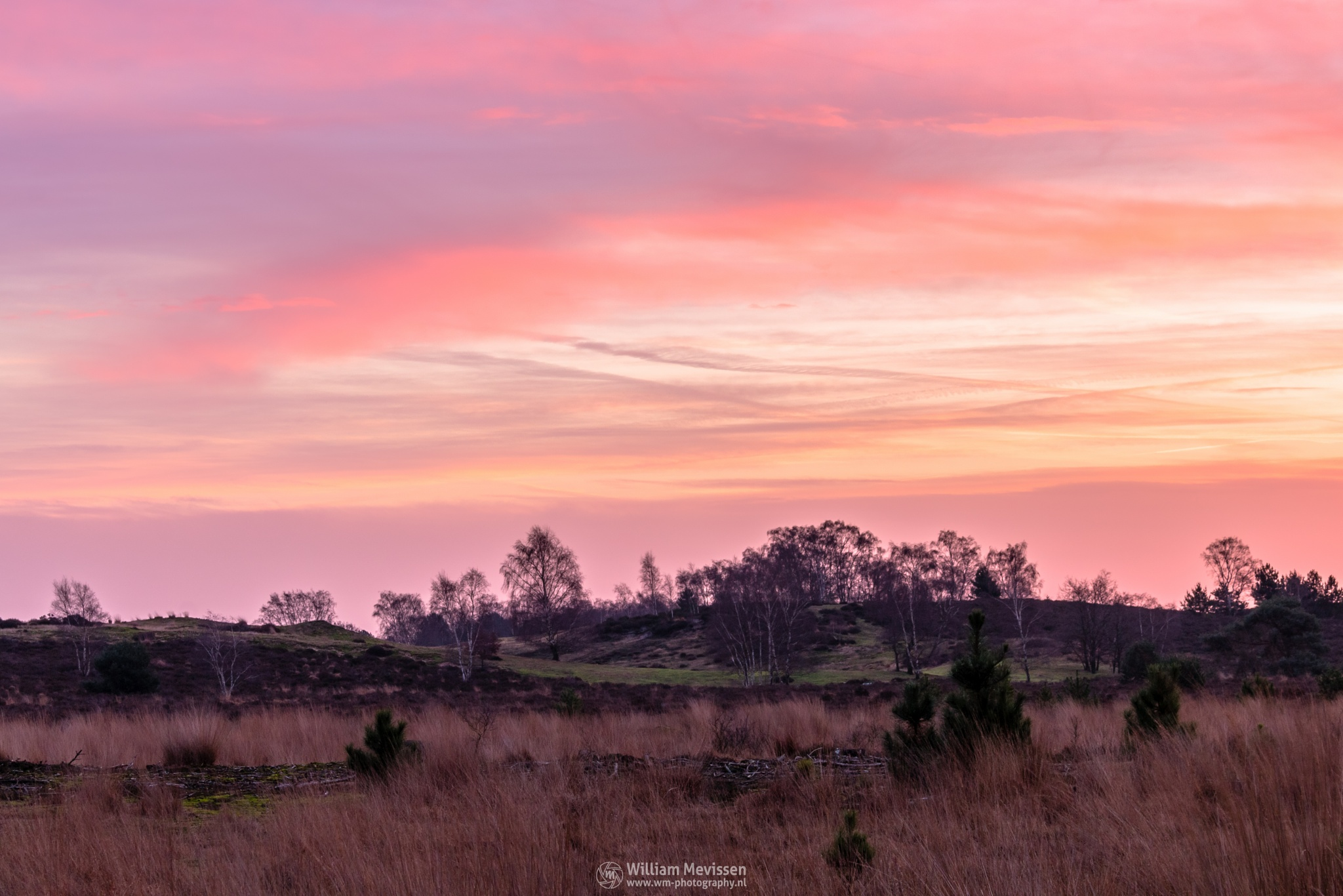 Photo in Nature #bergerheide #forest #woods #heathland #maasduinen #limburg #noord-limburg #nieuw-bergen #bergen #national park #nature #sand #dunes #sanddunes #tree #trees #sky #clouds #pink #purple #dawn